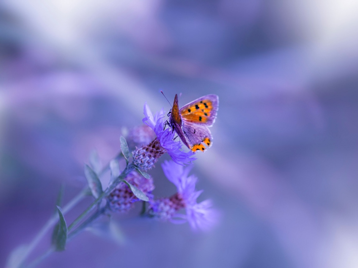 butterfly-purple-flower-iw.jpg