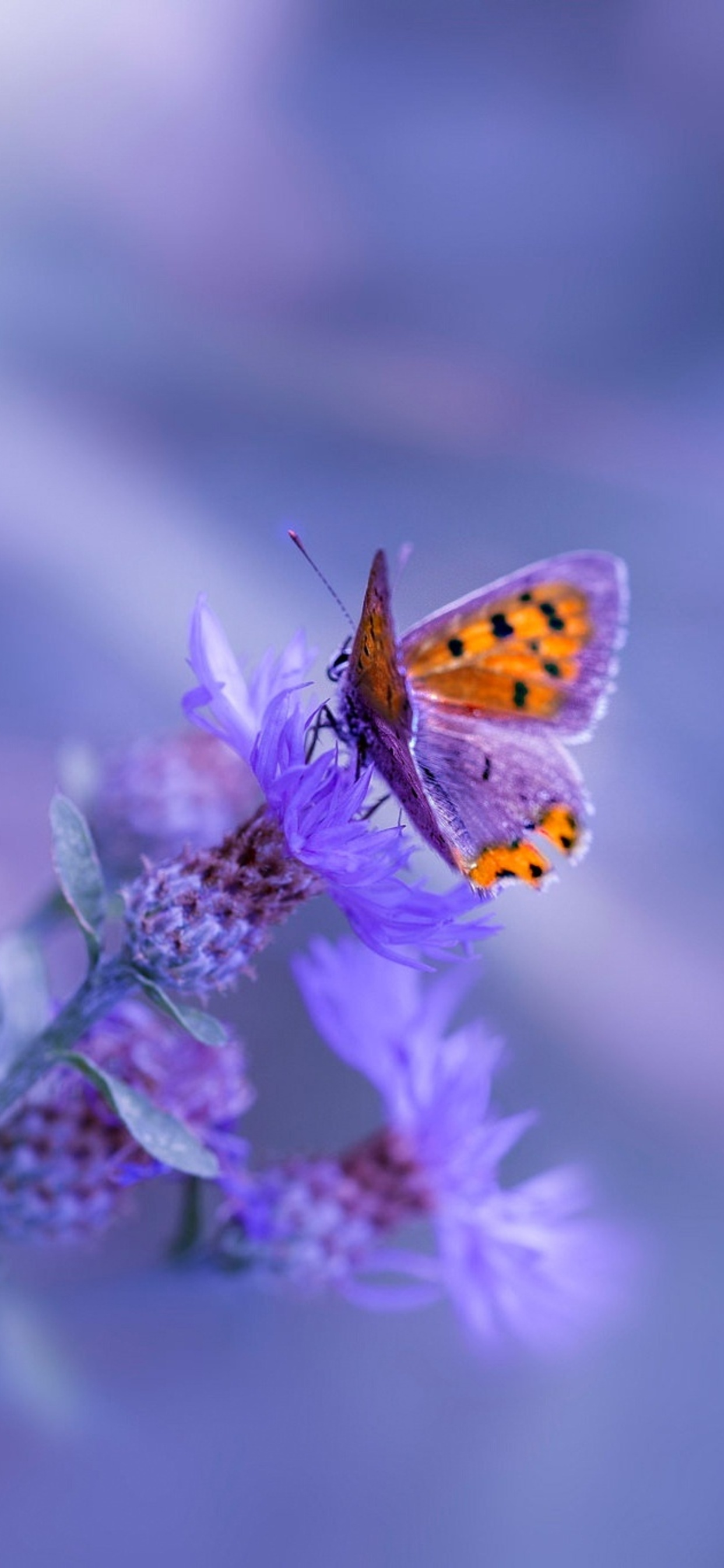 1242x2688 Butterfly Purple Flower Iphone Xs Max Hd 4k