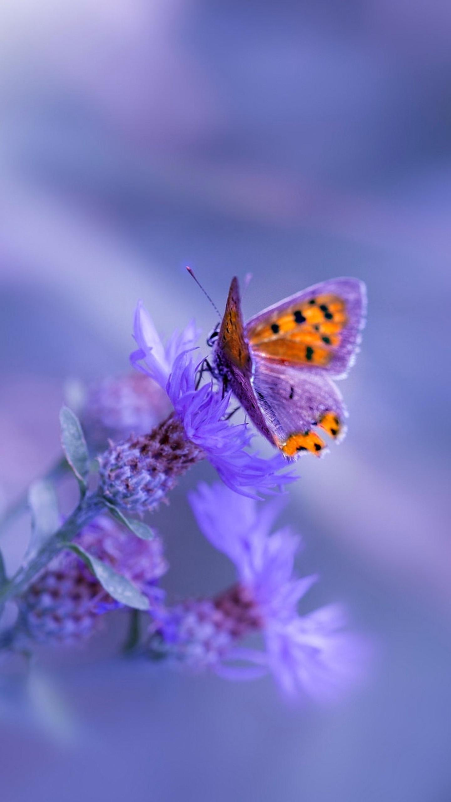 1440x2560 Butterfly Purple Flower Samsung Galaxy S6 S7 Google Pixel