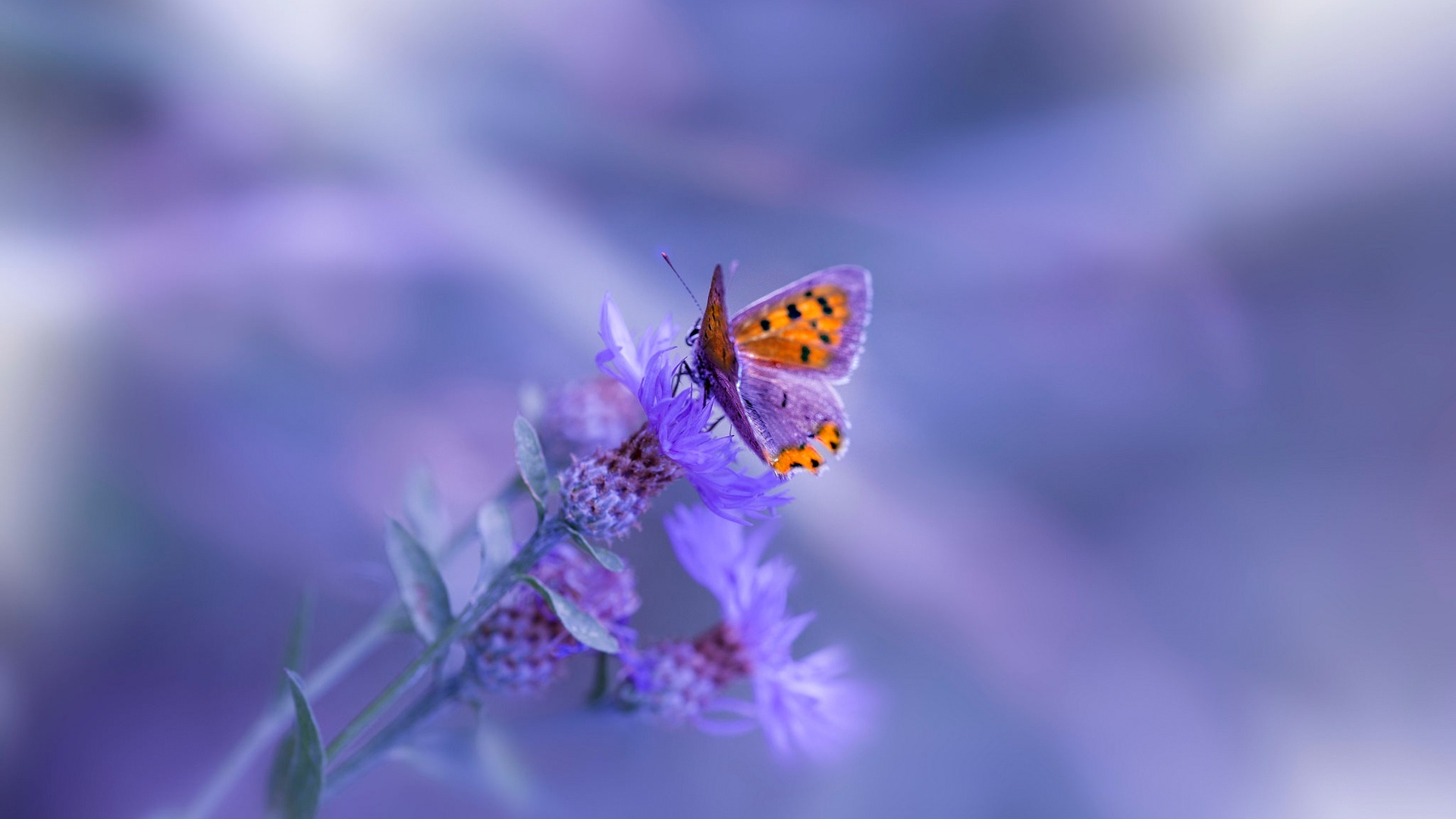 1920x1080 Butterfly Purple Flower Laptop Full HD 1080P HD ...