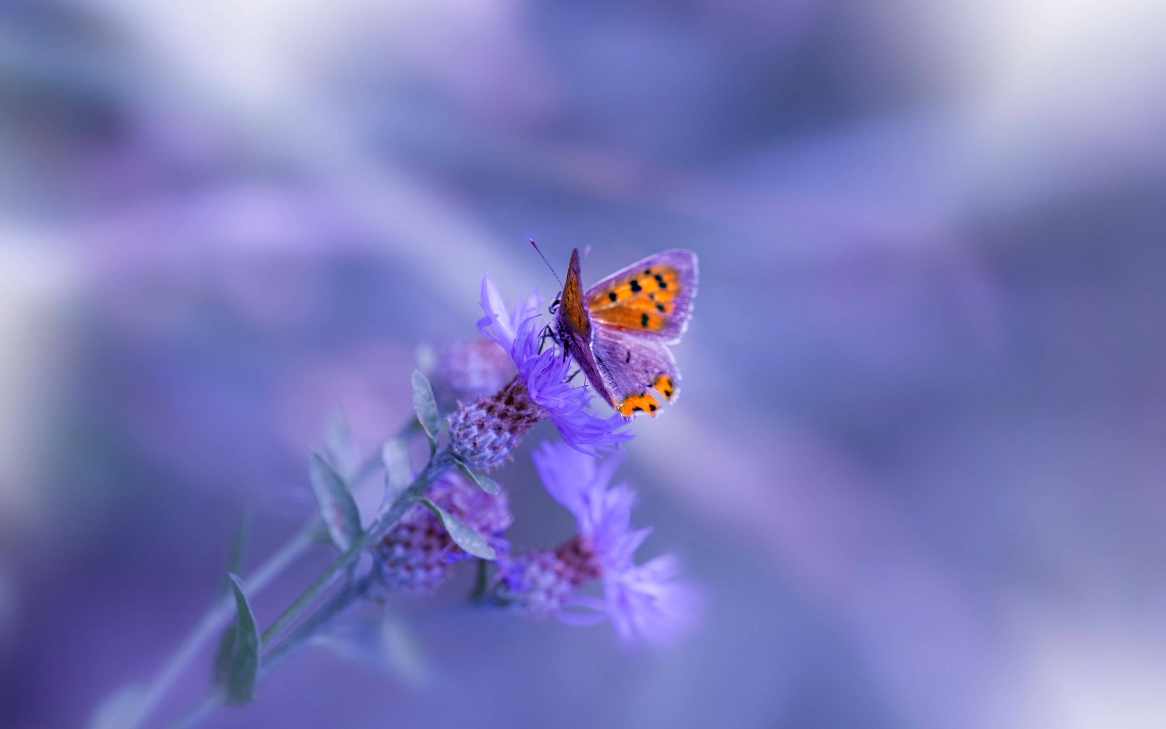 butterfly-purple-flower-iw.jpg
