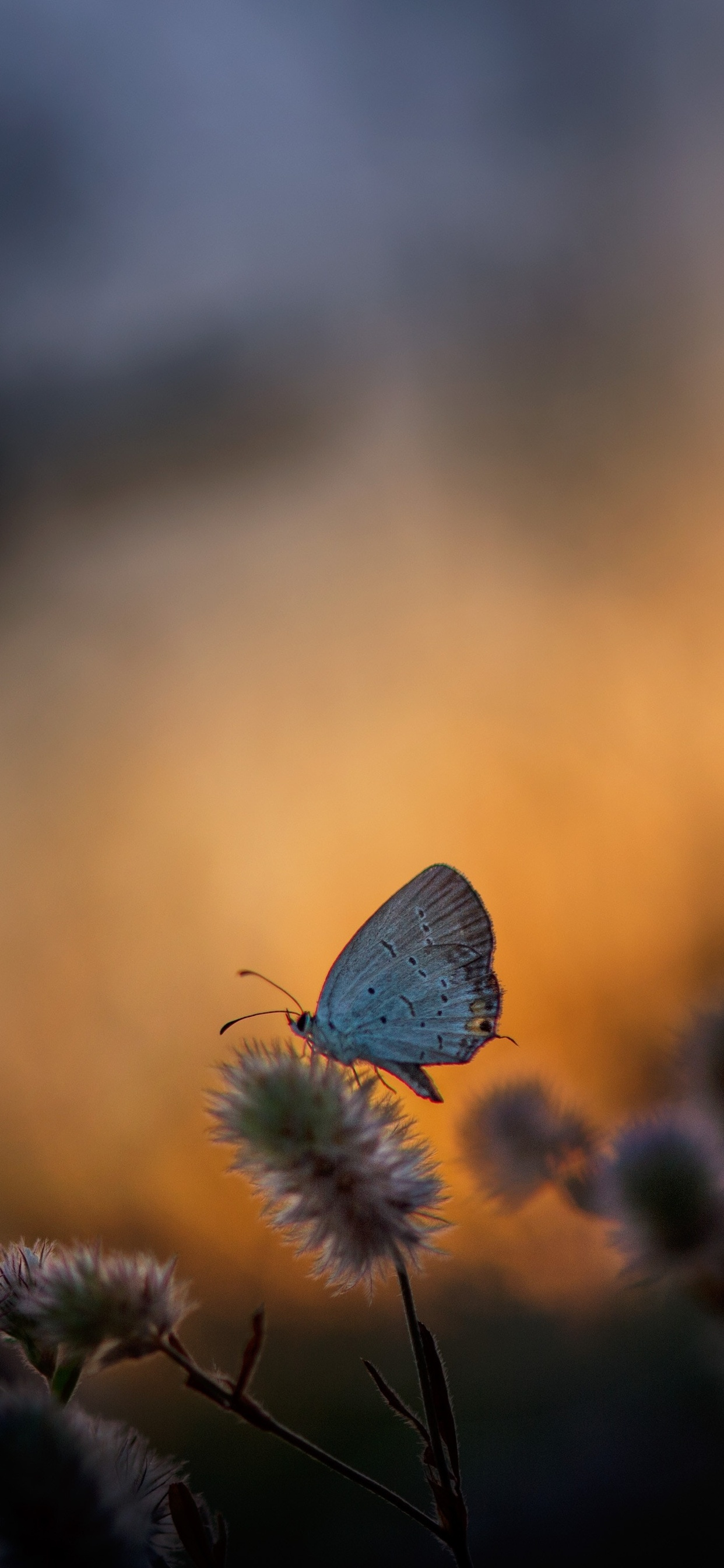 butterfly-sitting-on-plant-5k-v9.jpg