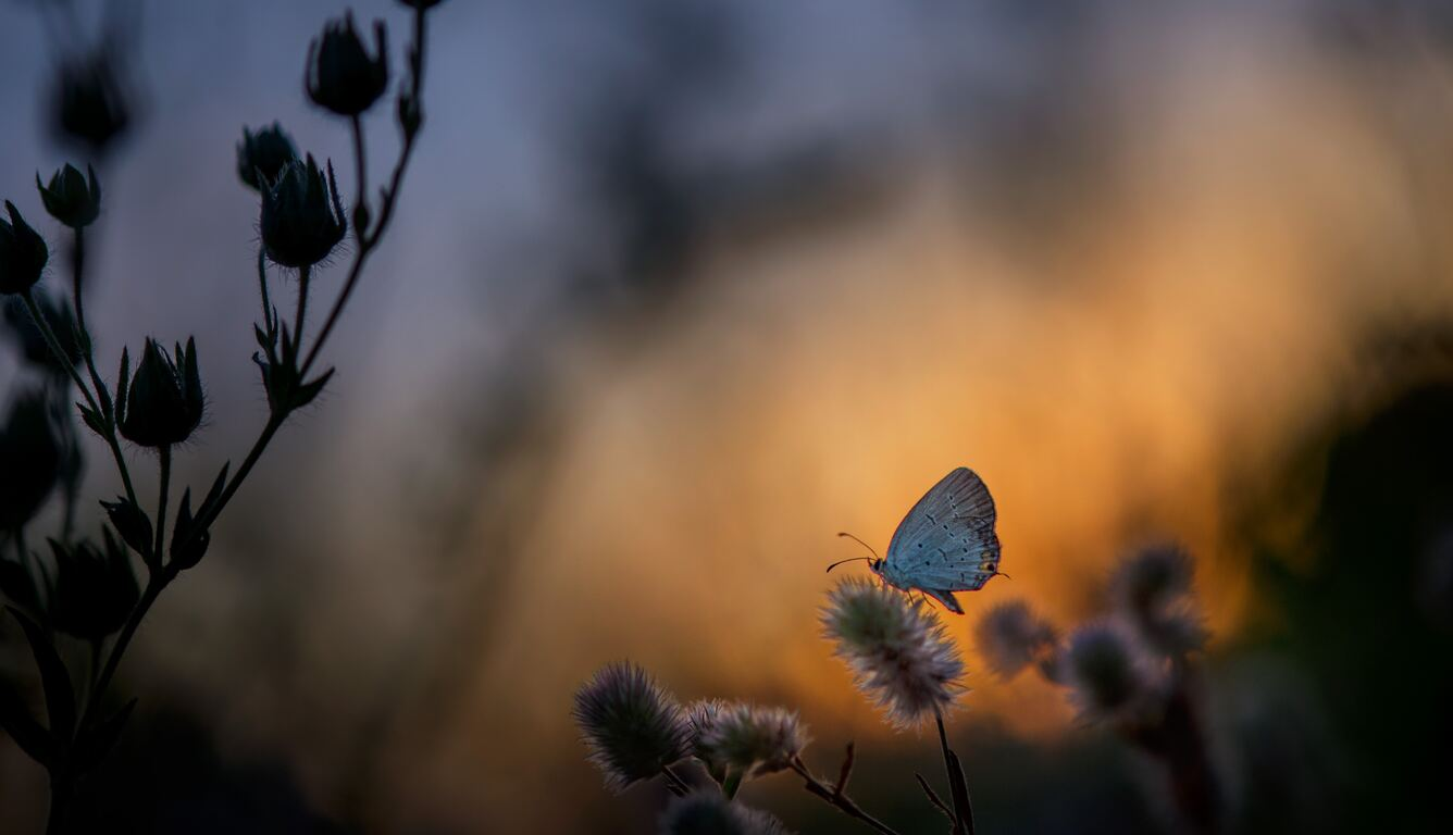 butterfly-sitting-on-plant-5k-v9.jpg