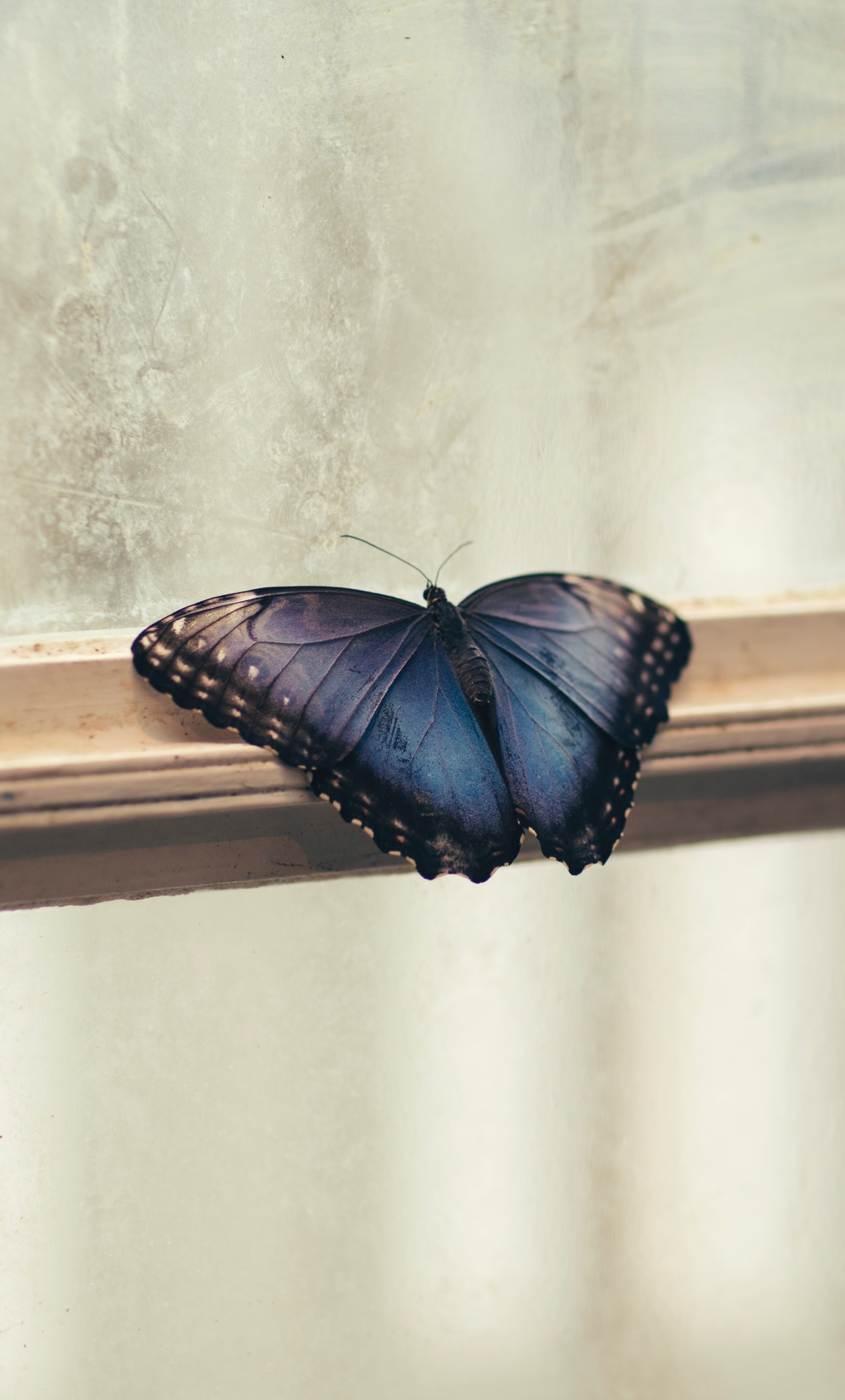 butterfly-sitting-on-window-side-5k-4q.jpg