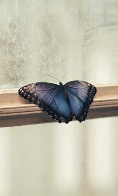 butterfly-sitting-on-window-side-5k-4q.jpg
