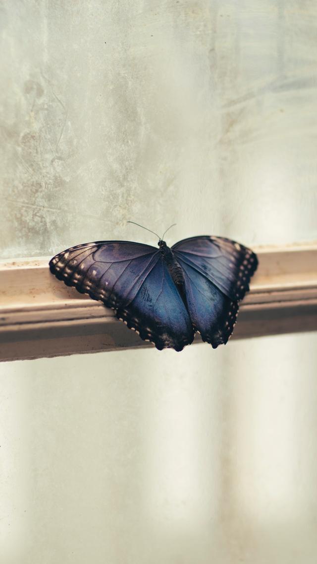 butterfly-sitting-window-5k-b0.jpg