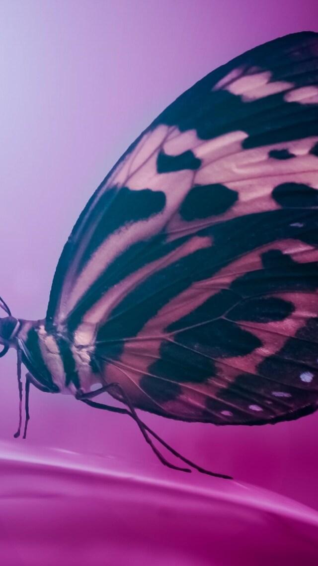 butterfly-wings-macro.jpg