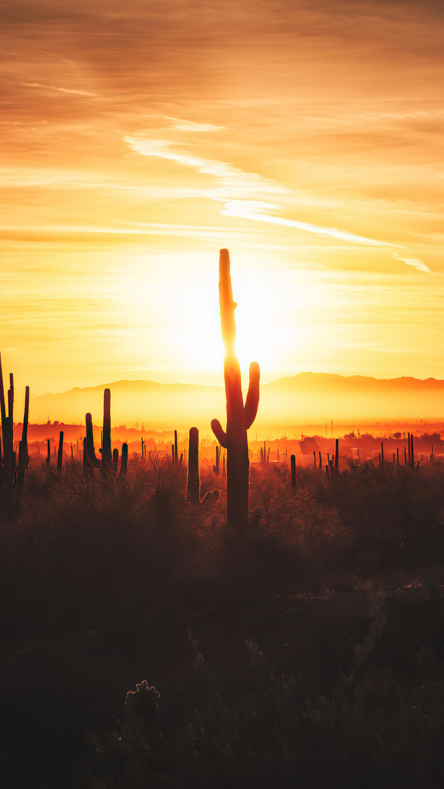 cactus-field-sunset-4k-kn.jpg