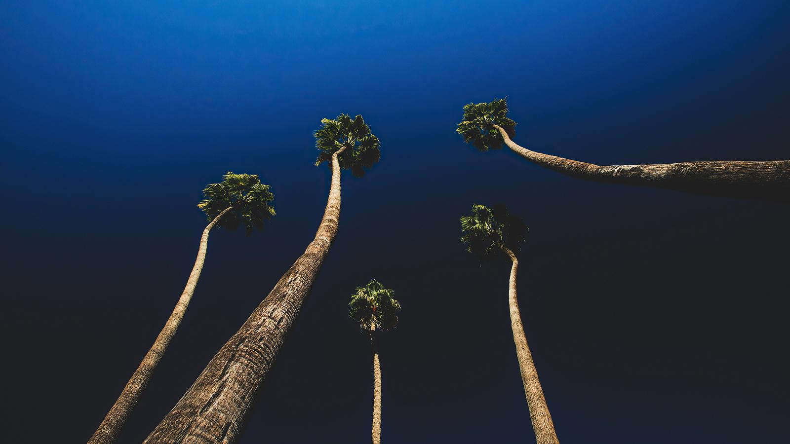 california-palm-trees-ul.jpg