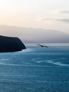calm-ocean-bird-flying-over-5k-it.jpg