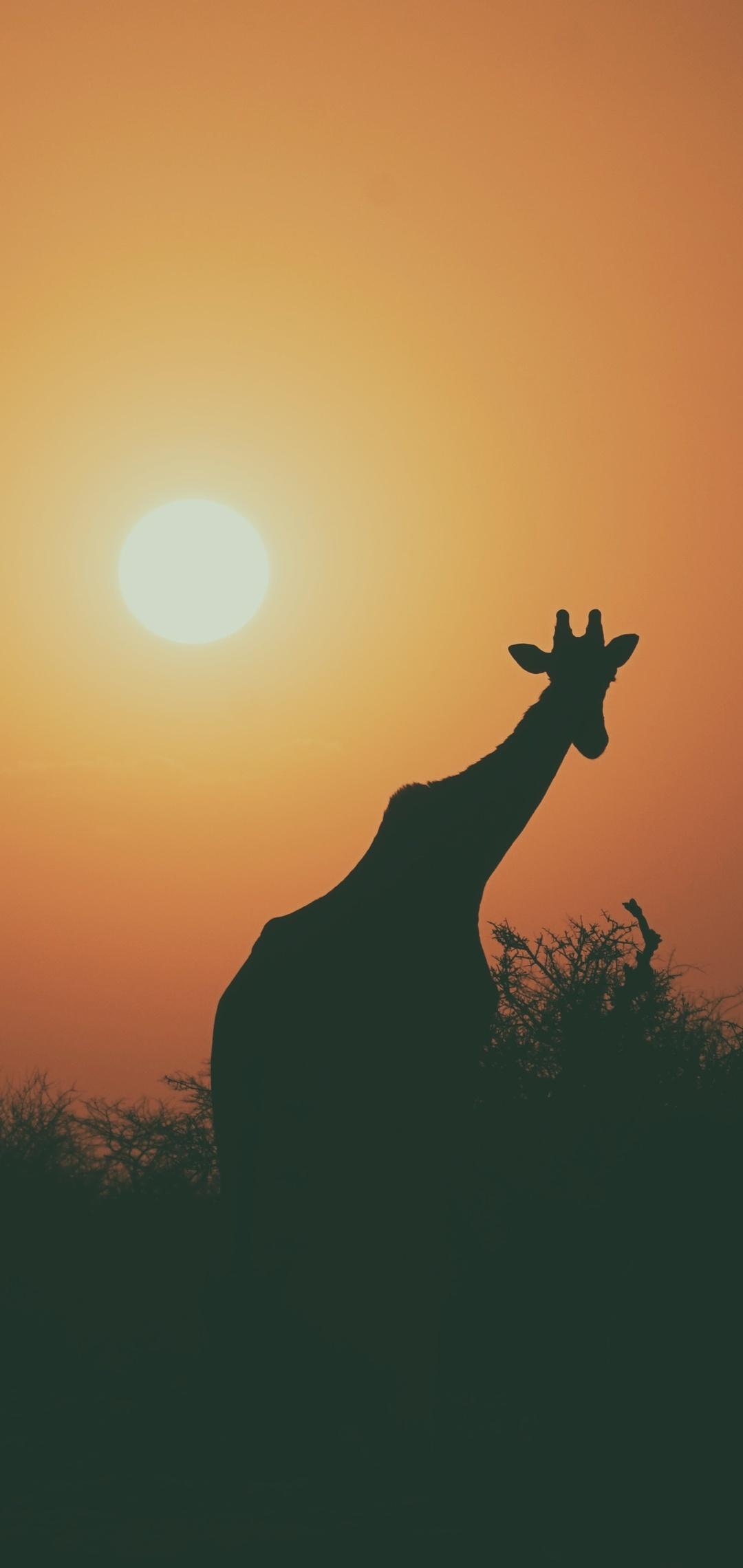 camel-silhouette-31.jpg