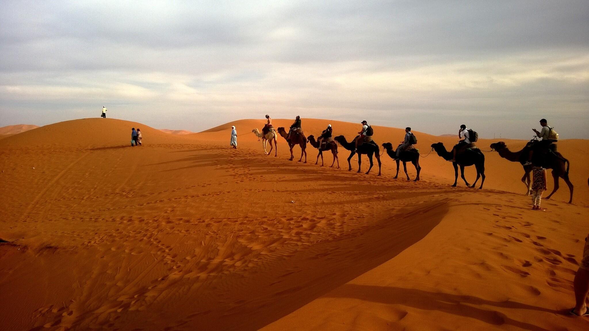 2048x1152 Camels In Caravan Desert 2048x1152 Resolution Hd
