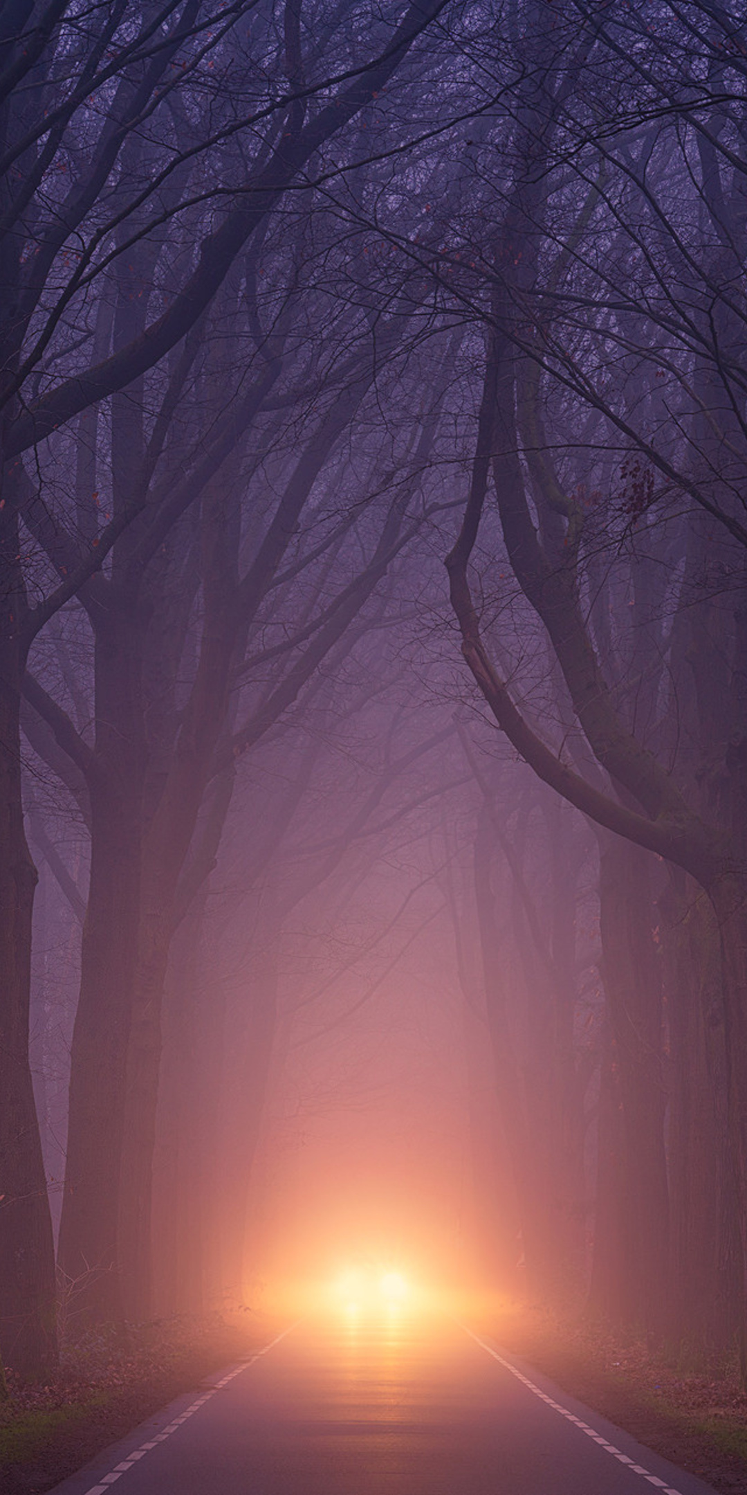 Car Light Road Autumn Trees Foggy Weather Y9