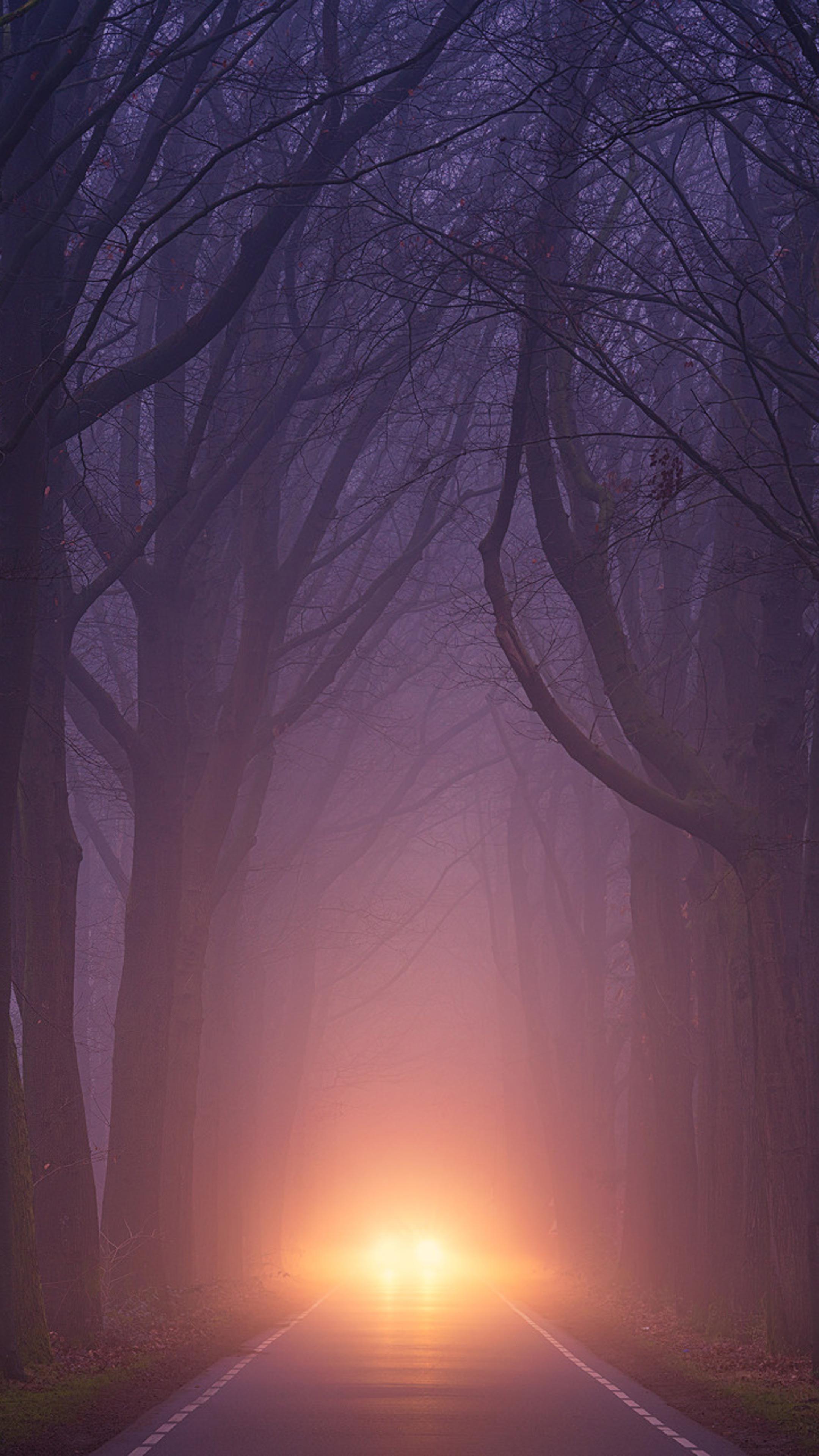 Car Light Road Autumn Trees Foggy Weather Y9