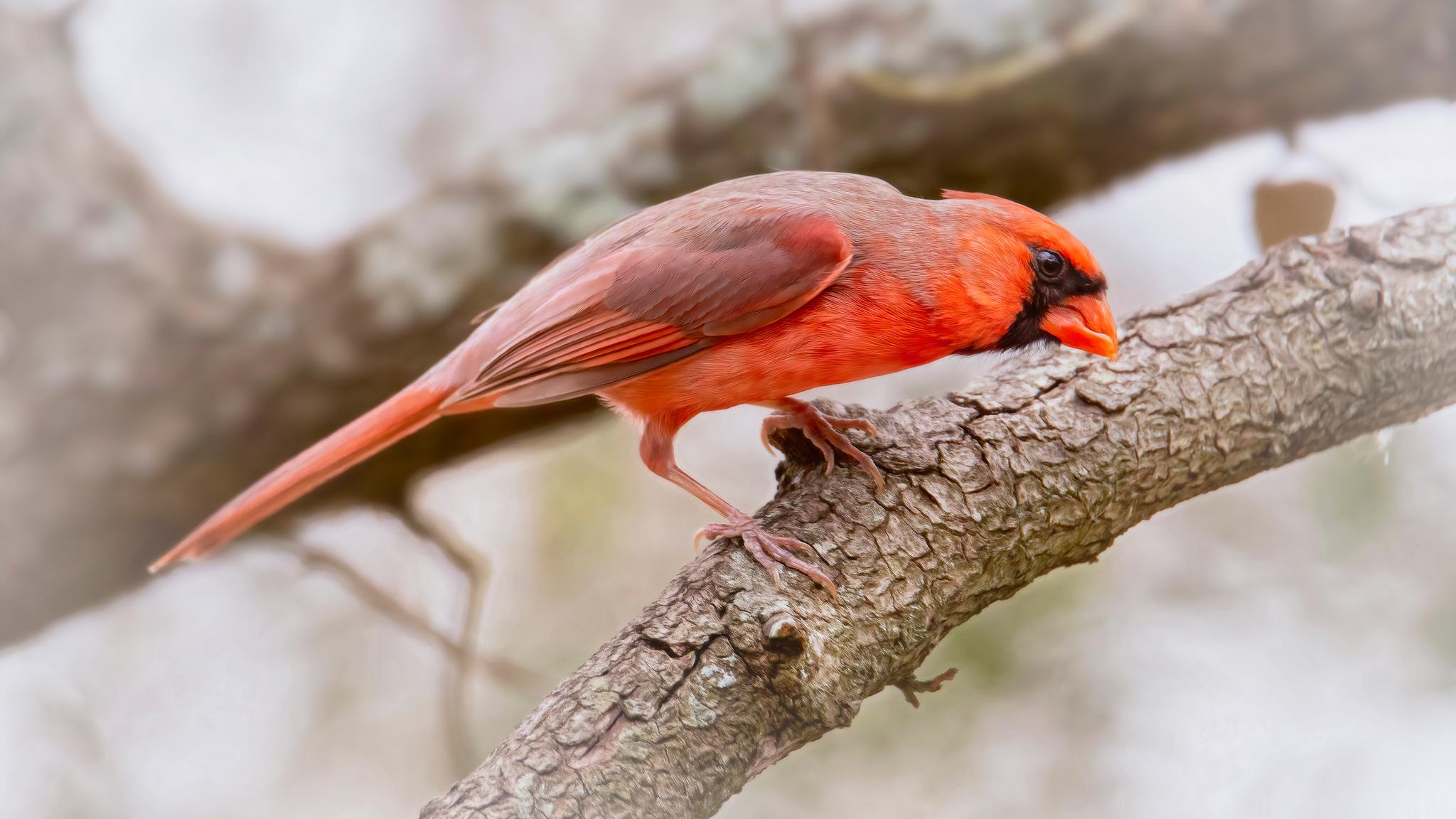 cardinal-bird-5k-24.jpg