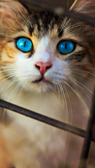 cat-blue-eyes-wv.jpg