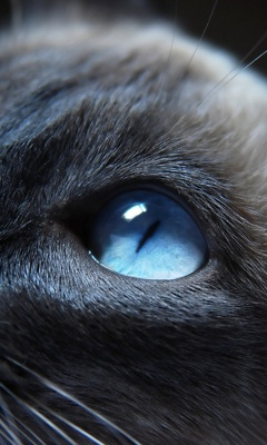 cat-eyes-closeup-8t.jpg