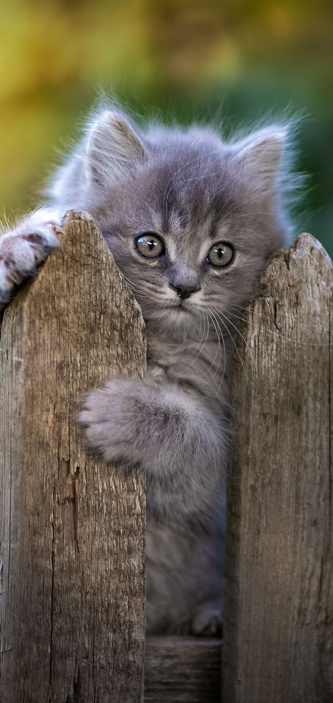 cat-fence-pawn-44.jpg