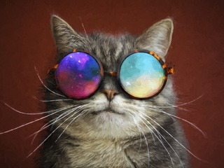 320x240 Cat Glasses Party Cool Painting Apple Iphone Ipod Touch