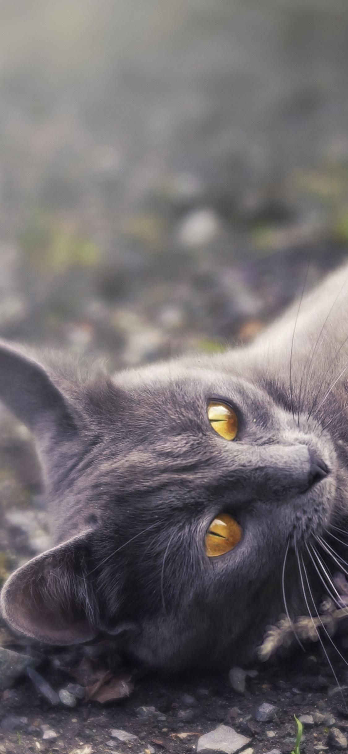 cat-golden-eyes-lying-down-5k-mh.jpg
