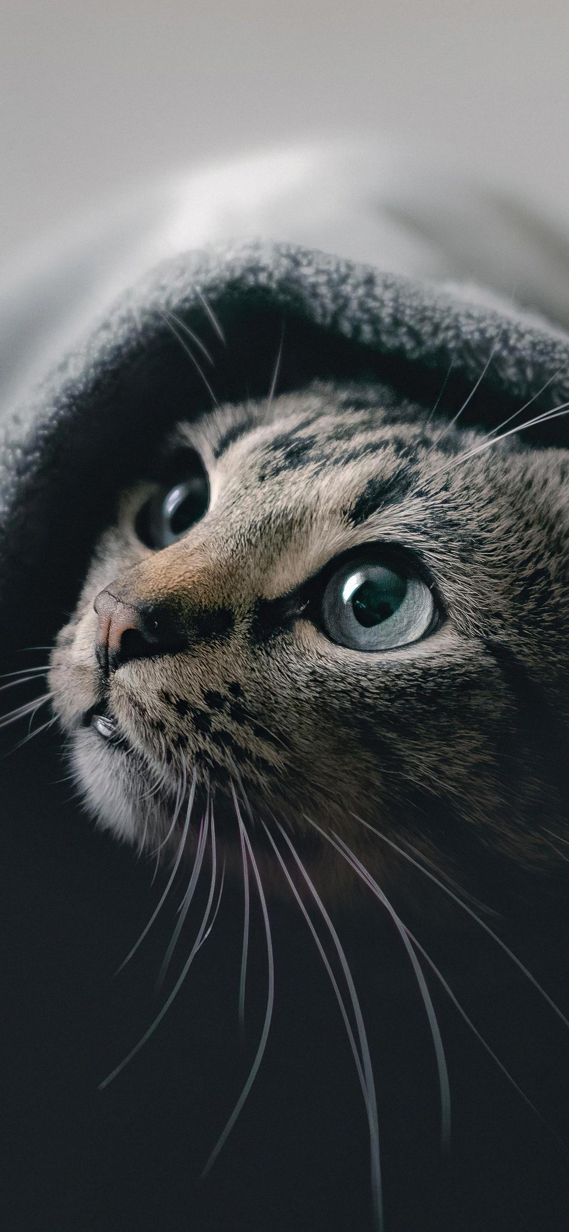 cat-hideout-5k-jy.jpg