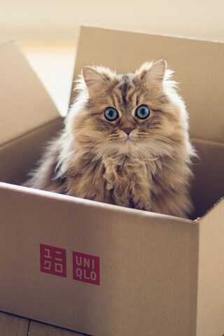 cat-in-box-4k.jpg