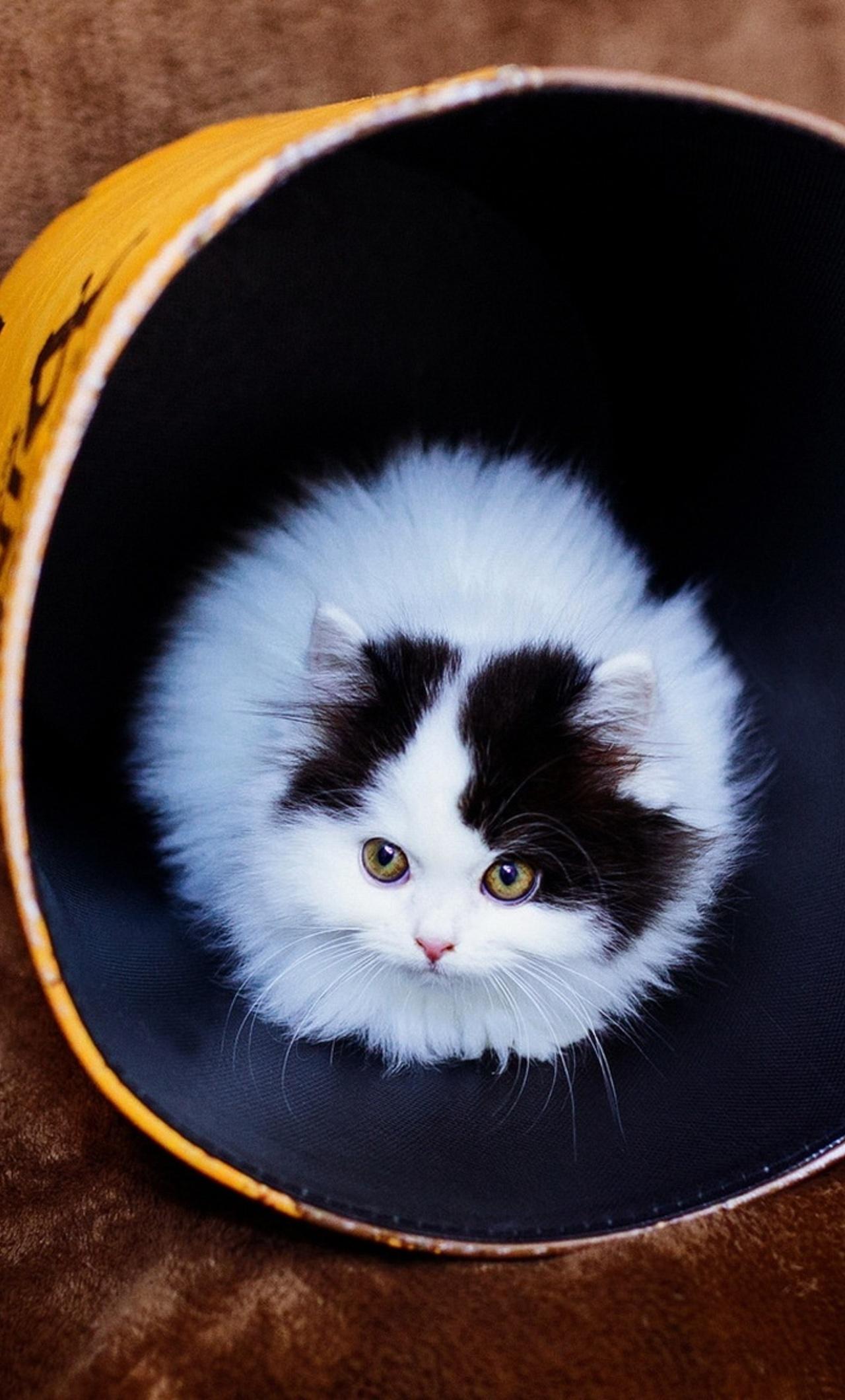 cat-in-bucket-av.jpg