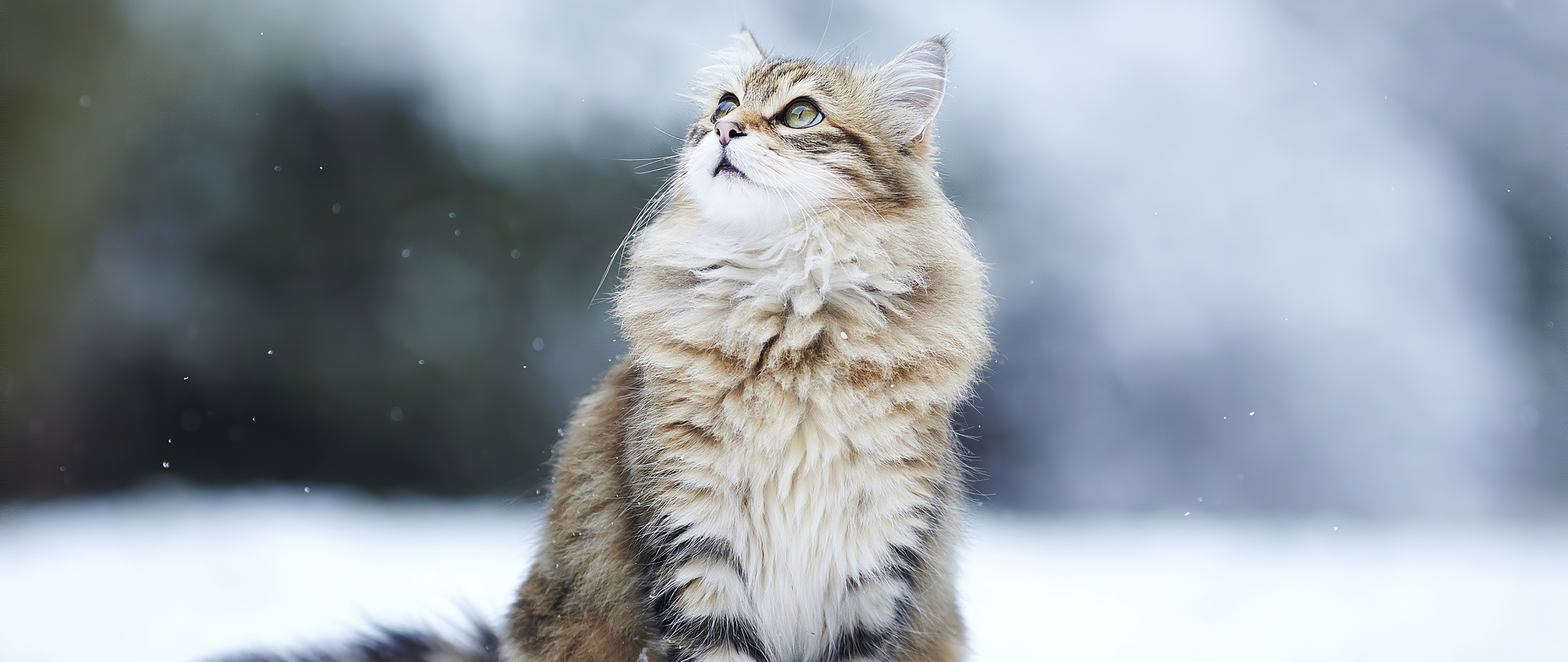 cat-in-winter-bm.jpg