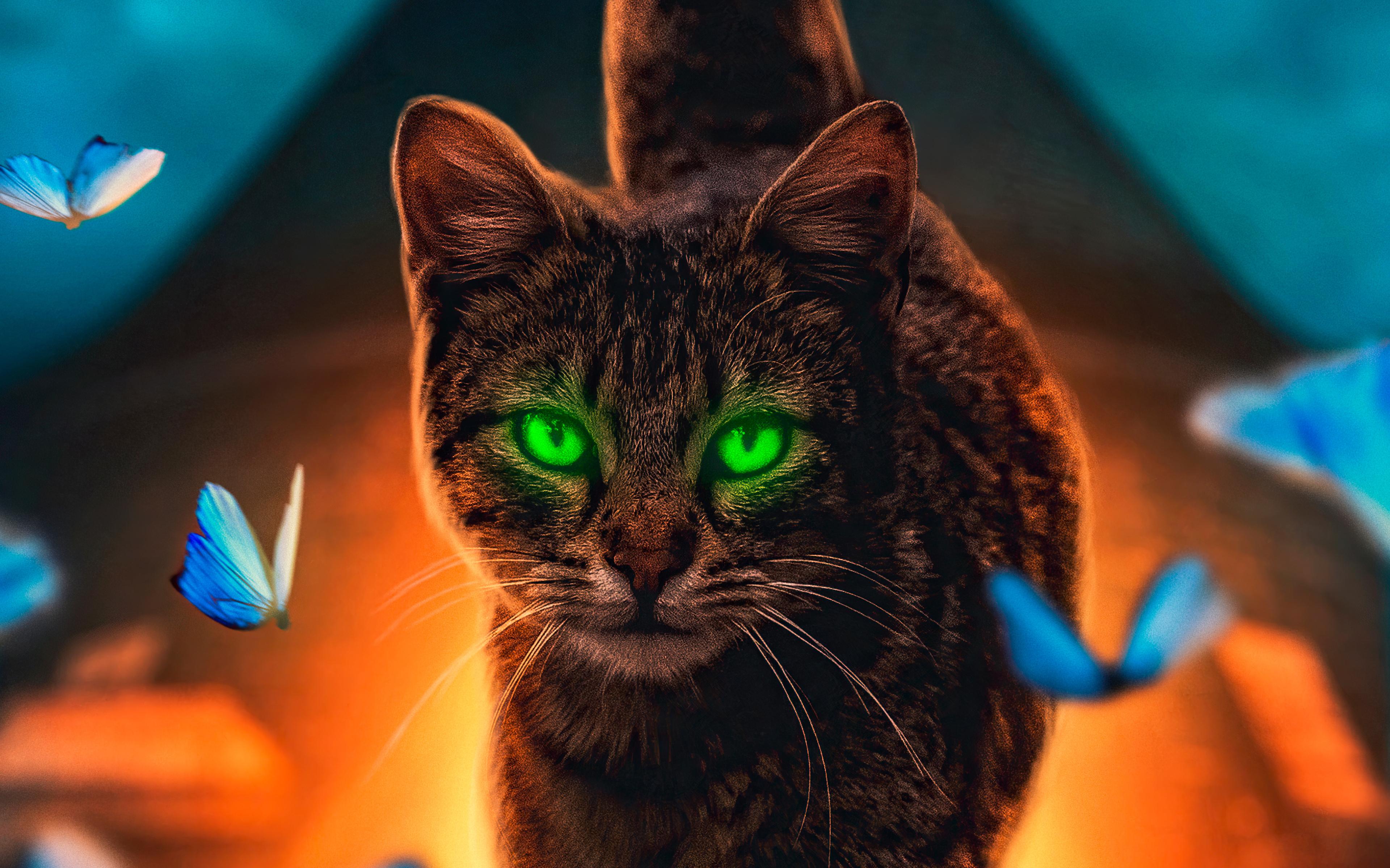 cat-magical-walk-4k-s9.jpg