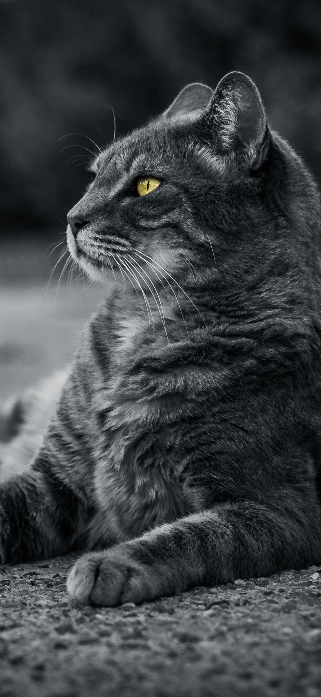 cat-monochrome-4k-67.jpg