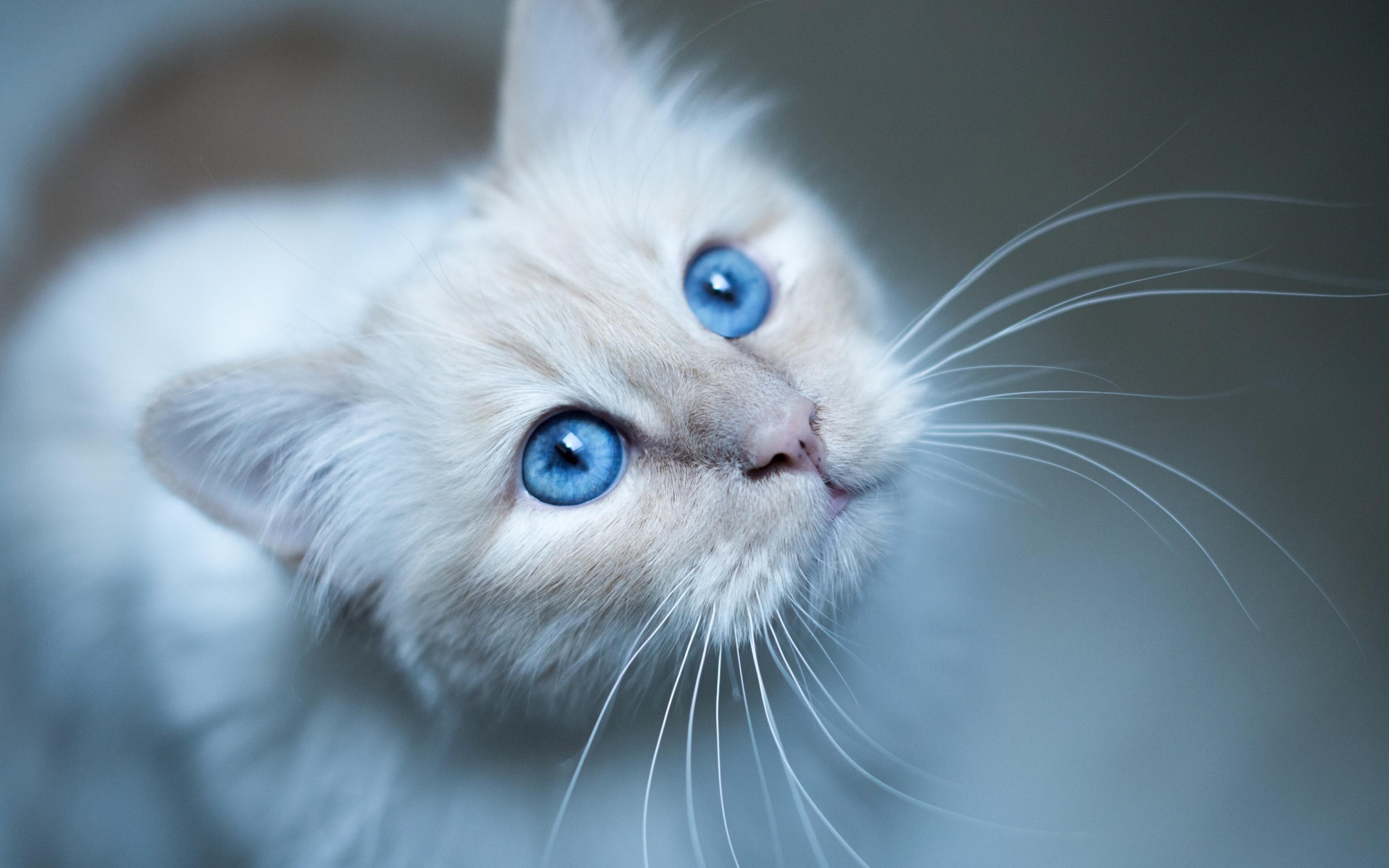 cat-muzzle.jpg
