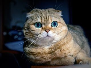 cat-ocean-eyes-xh.jpg