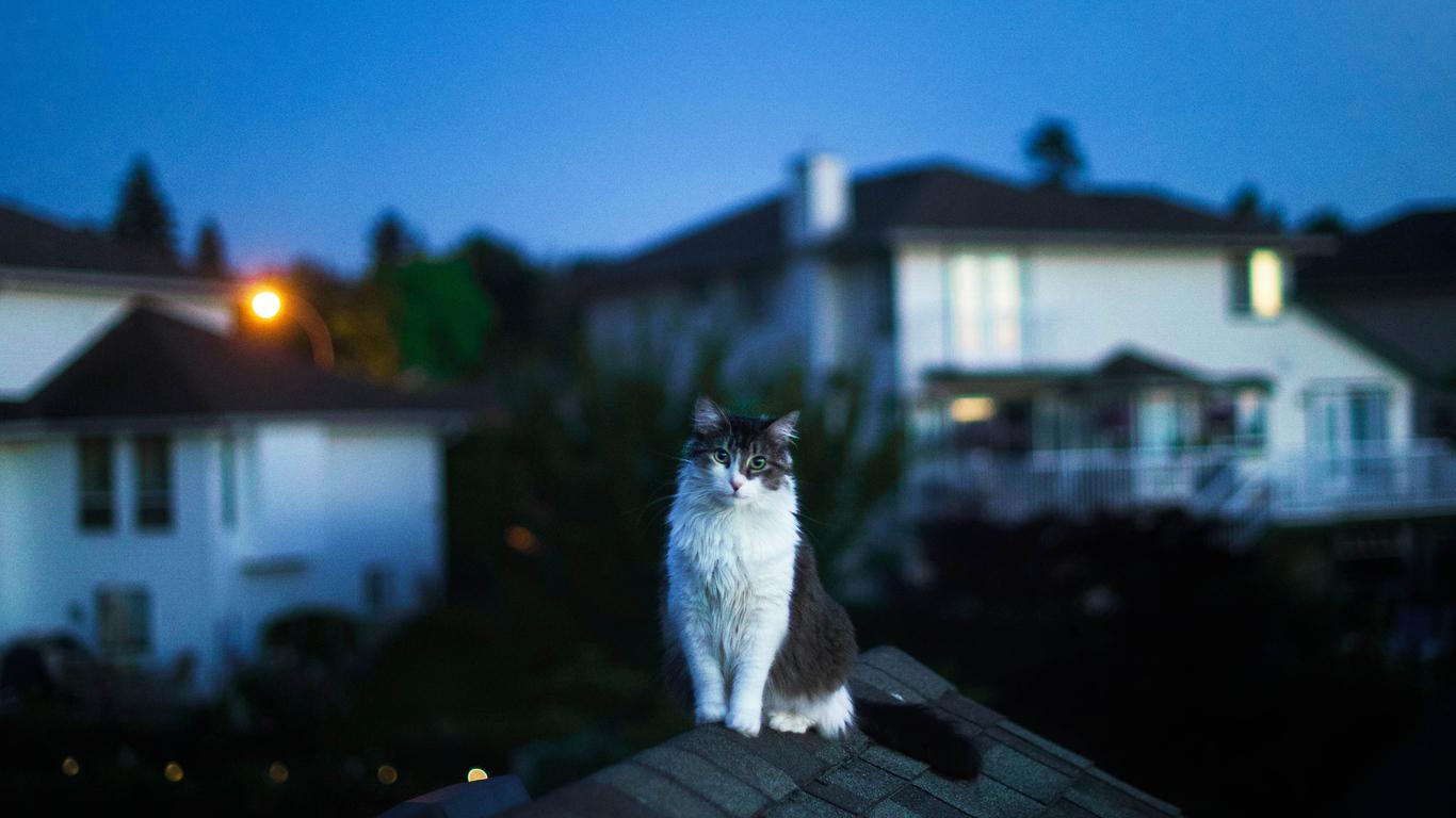 1366x768 Cat On Roof 5k 1366x768 Resolution Hd 4k