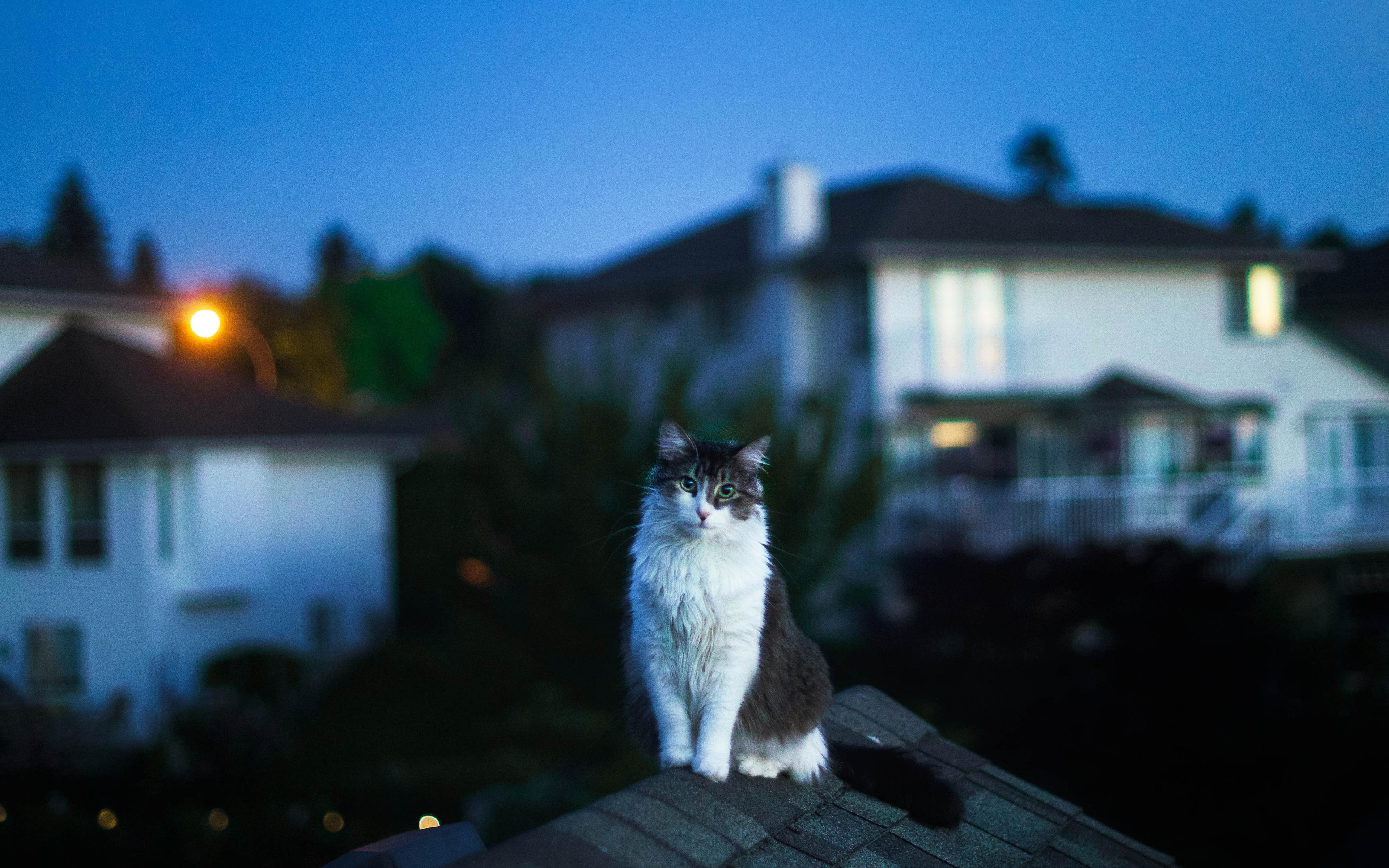 cat-on-roof-5k-kh.jpg