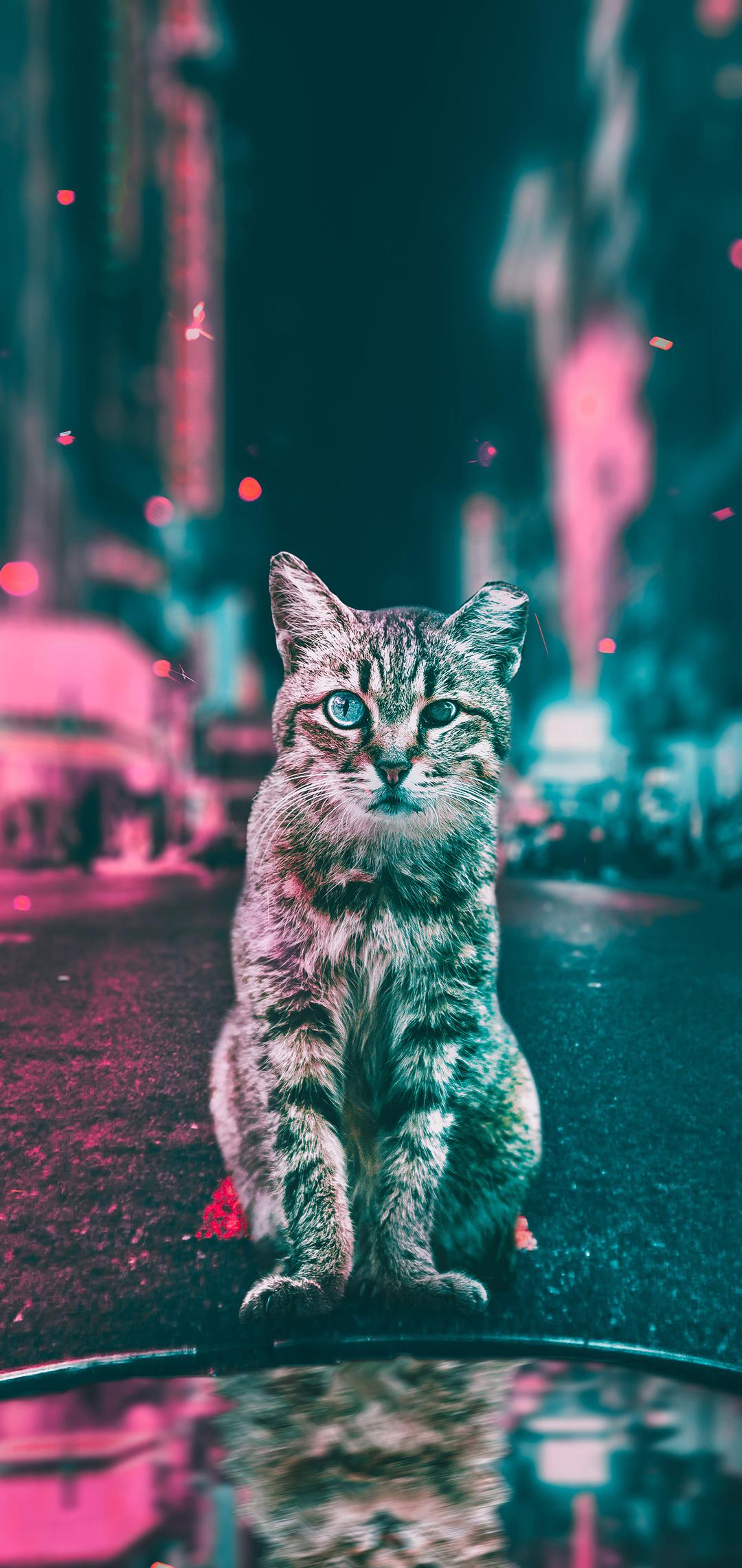 cat-road-lights-gy.jpg