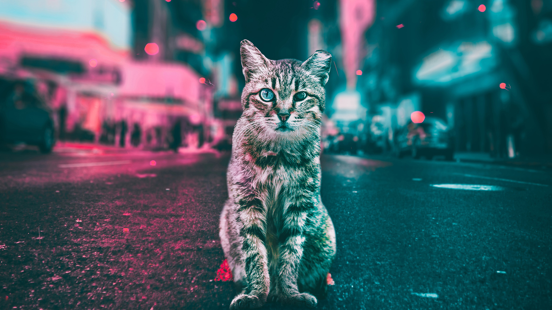 1920x1080 Cat Road Lights Laptop Full Hd 1080p Hd 4k Wallpapers Images Backgrounds Photos And Pictures