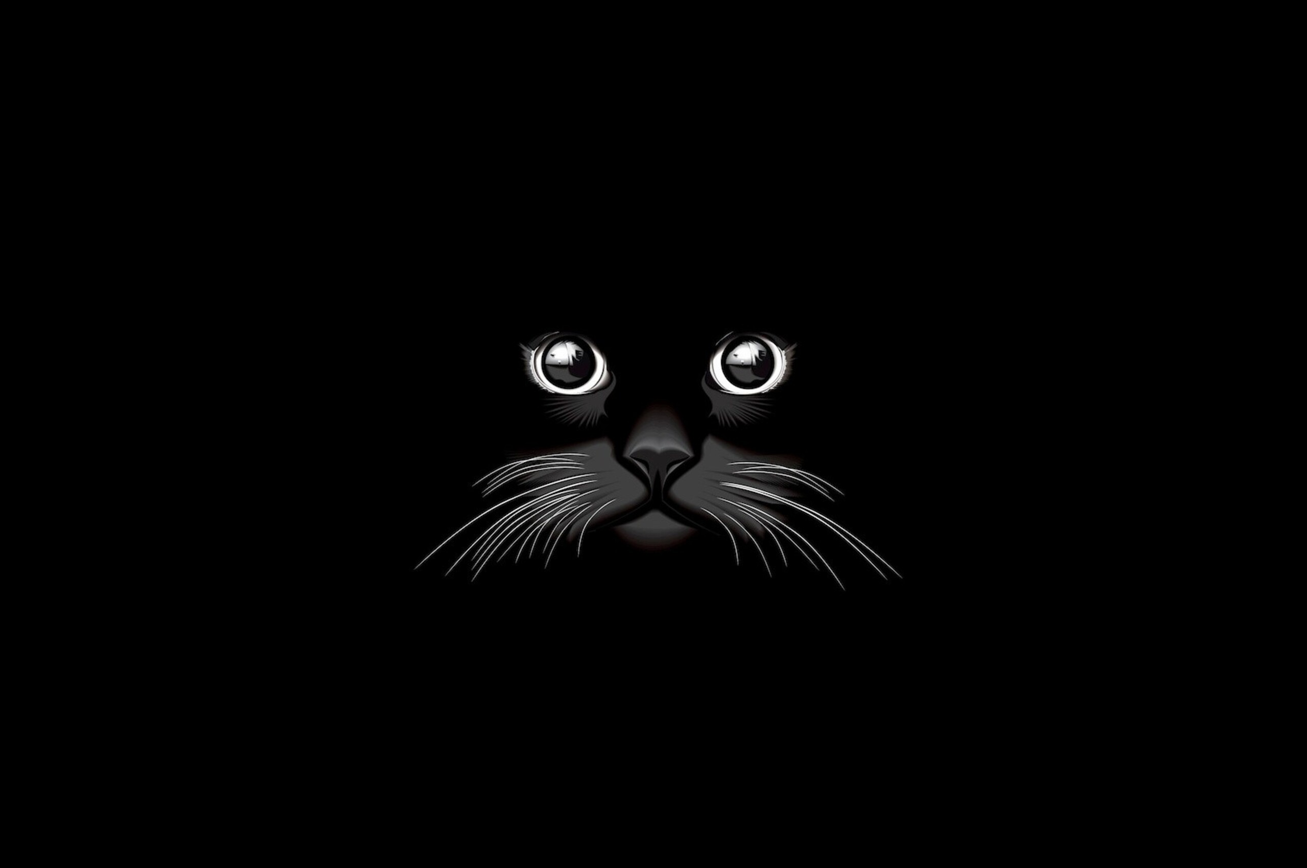 2560x1700 Cat Vector Chromebook Pixel Hd 4k Wallpapers Images