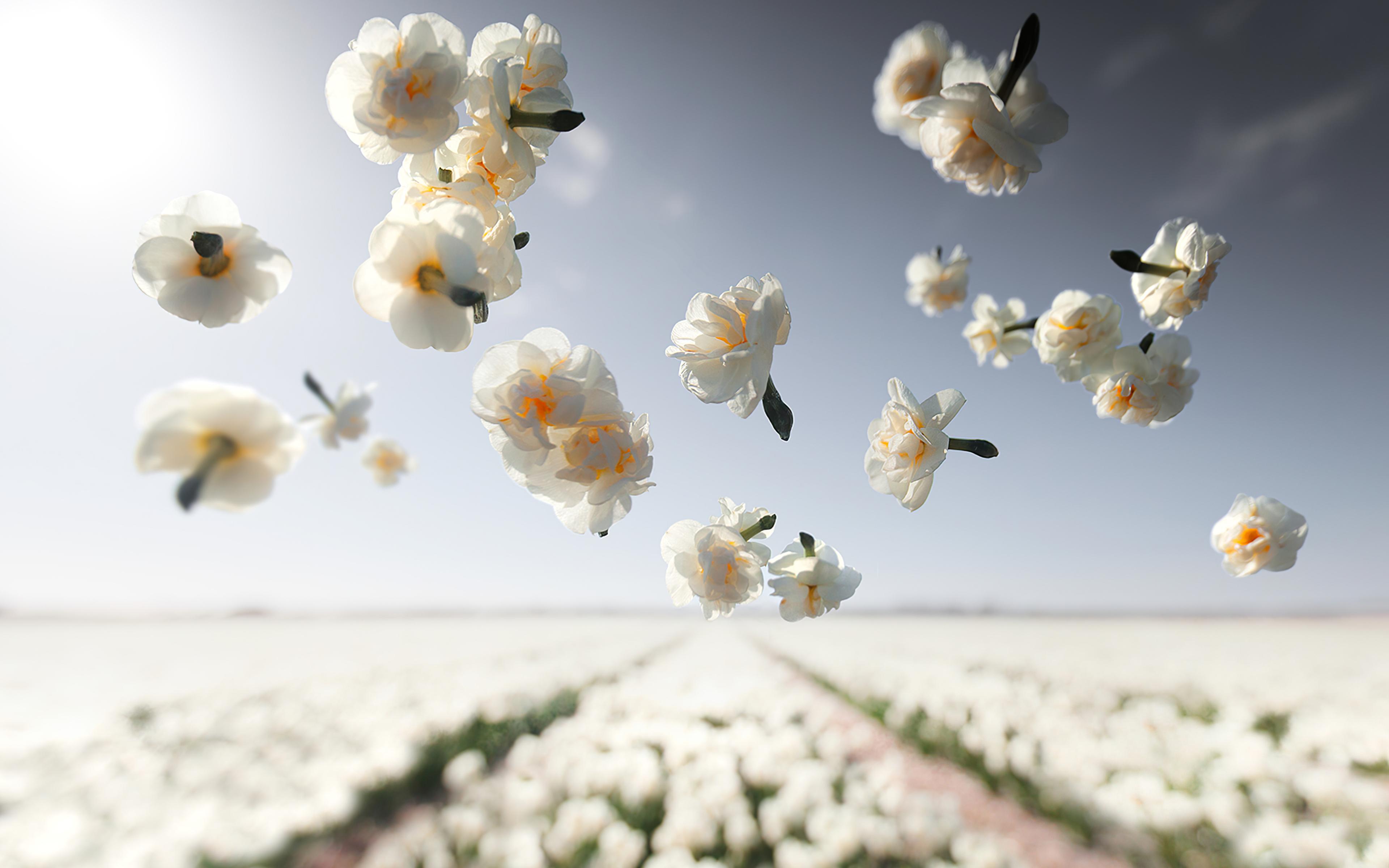 cheerfulness-flowers-gv.jpg