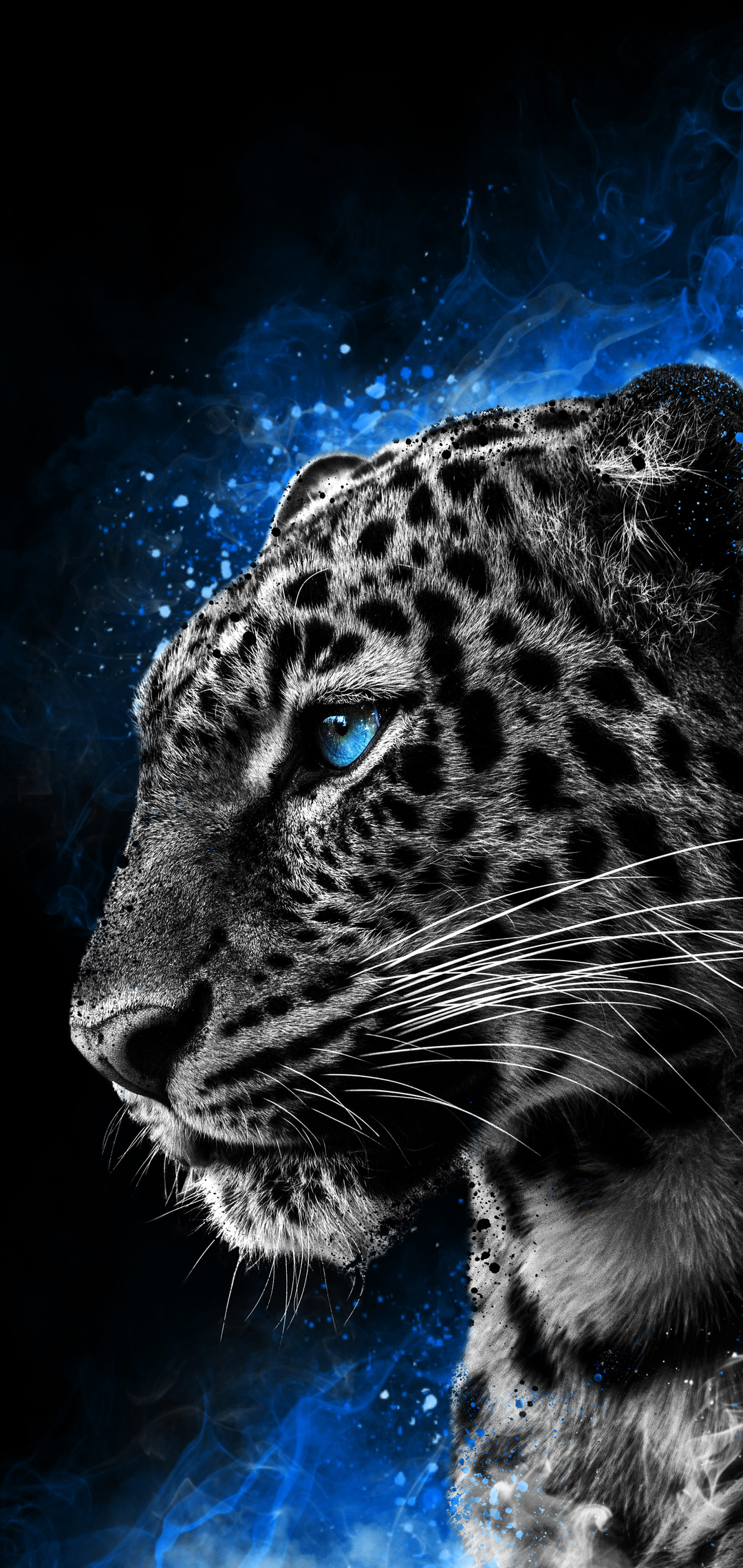 cheetah-galaxy-eyes-5m.jpg