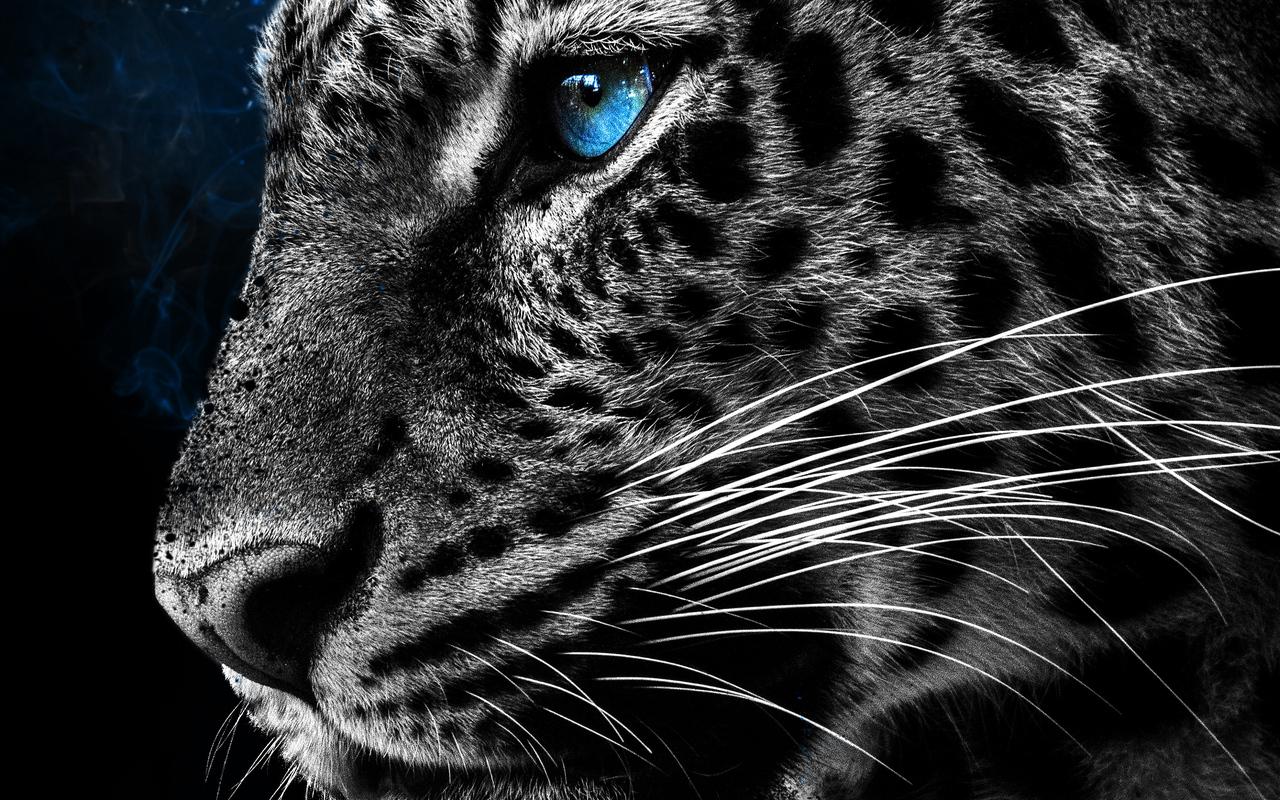 cheetah-galaxy-eyes-5m.jpg