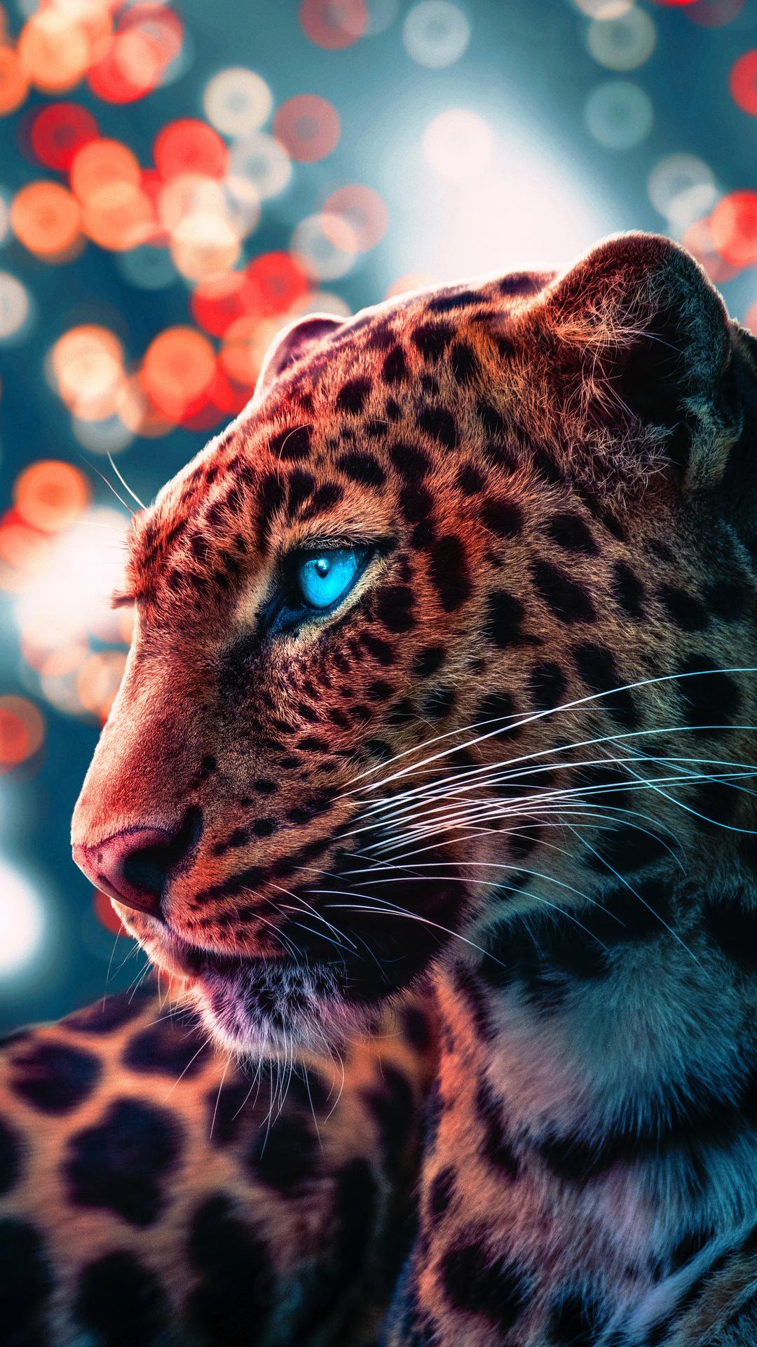 cheetah-magical-eyes-4k-q0.jpg