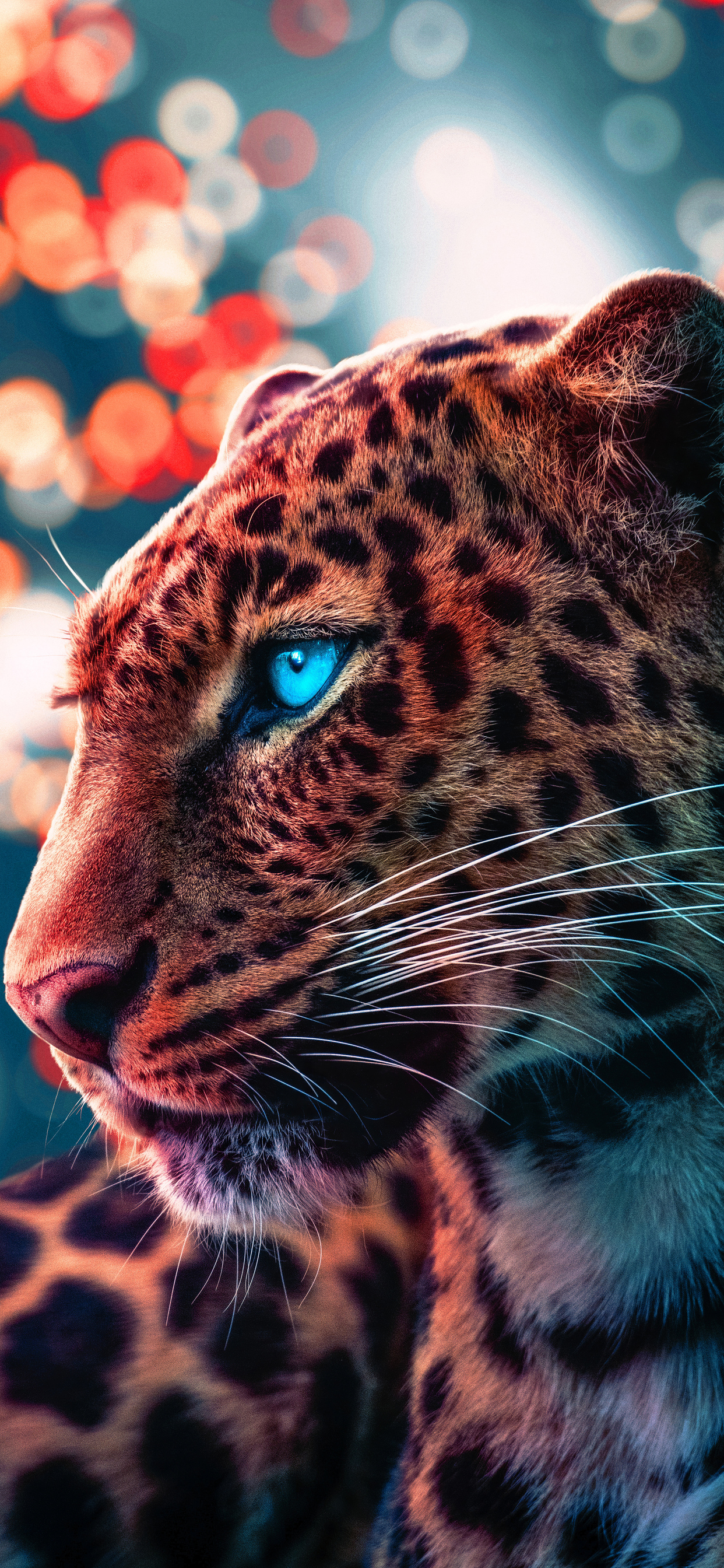 1242x2688 Cheetah Magical Eyes 4k Iphone Xs Max Hd 4k Wallpapers Images Backgrounds Photos And Pictures