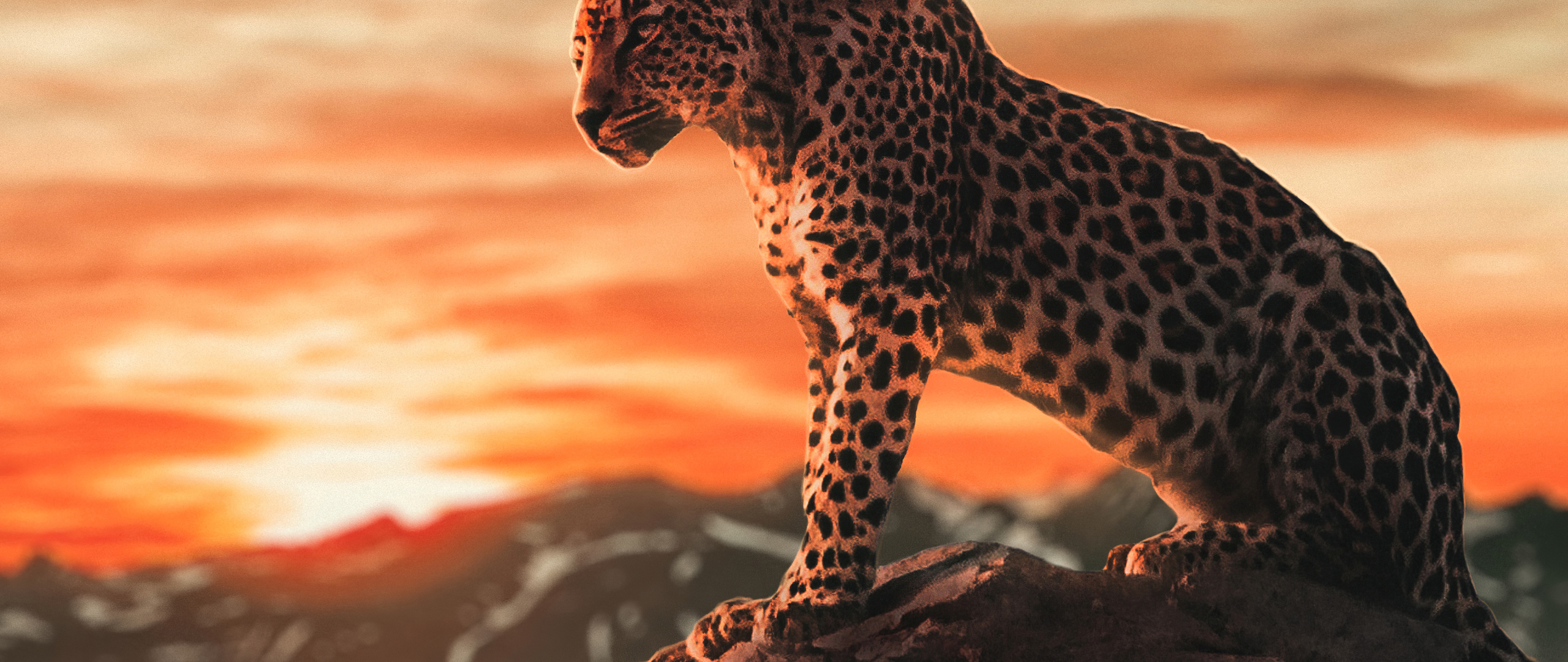 cheetah-morning-time-4k-7a.jpg
