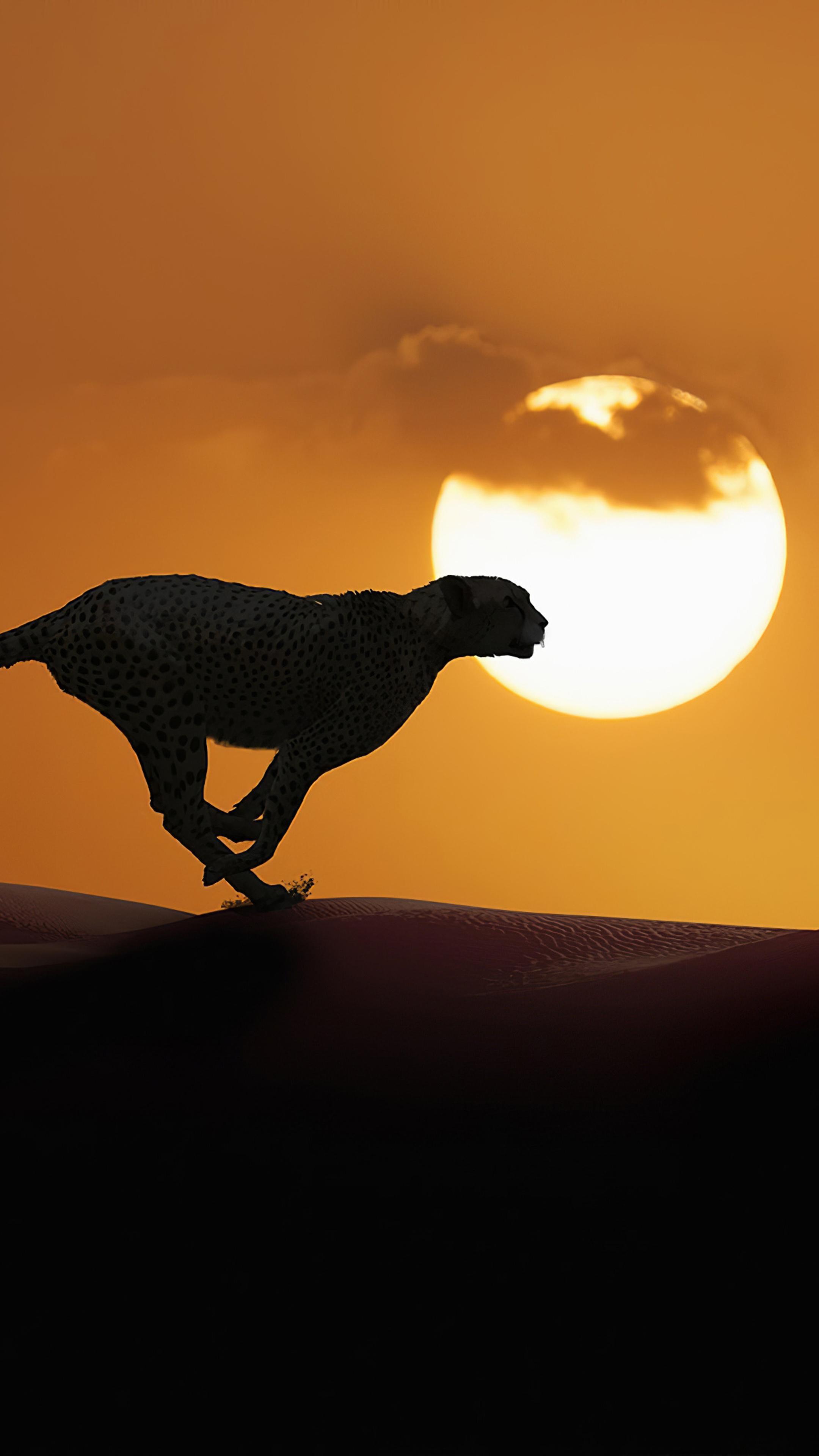cheetah-running-4k-ax.jpg