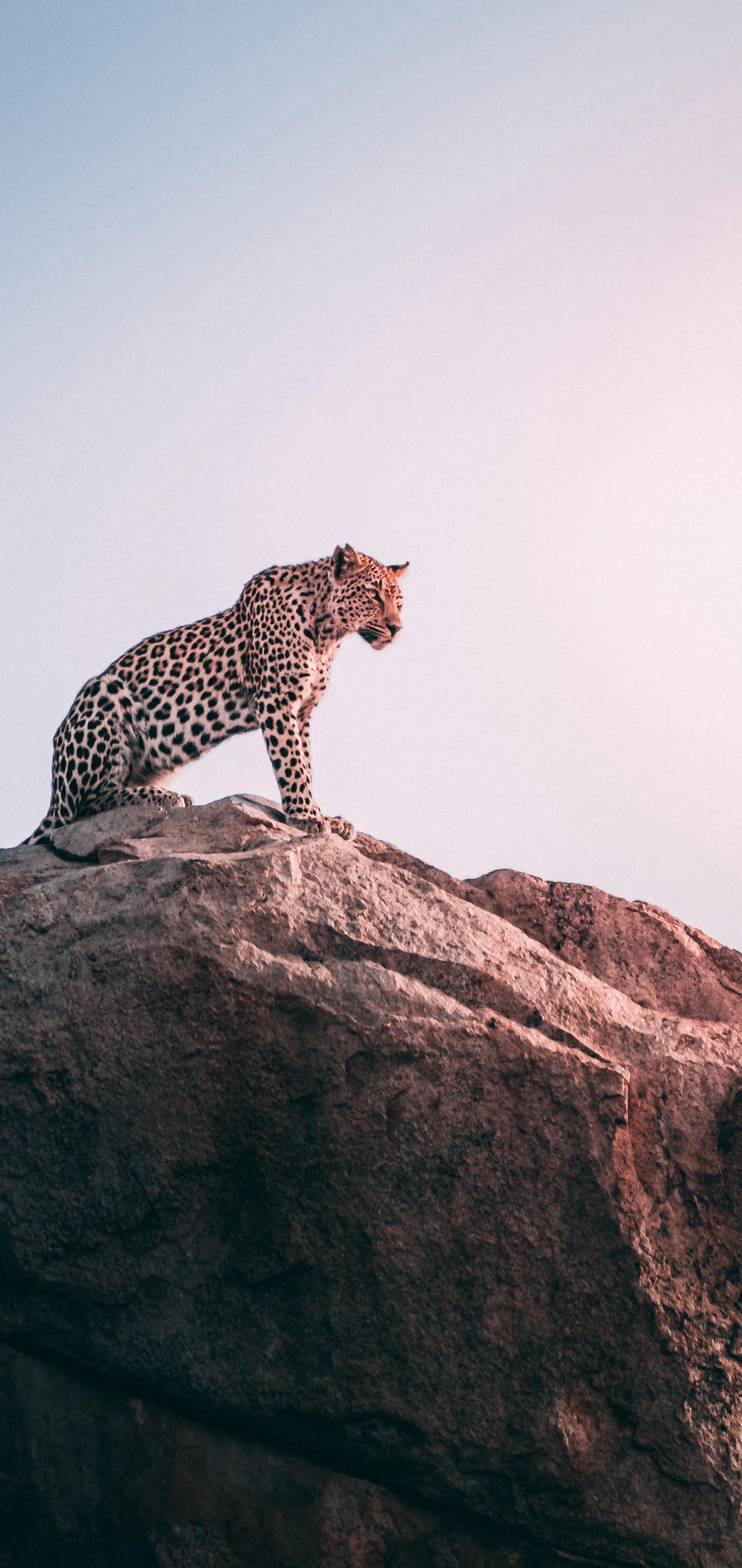 cheetah-sight-2j.jpg