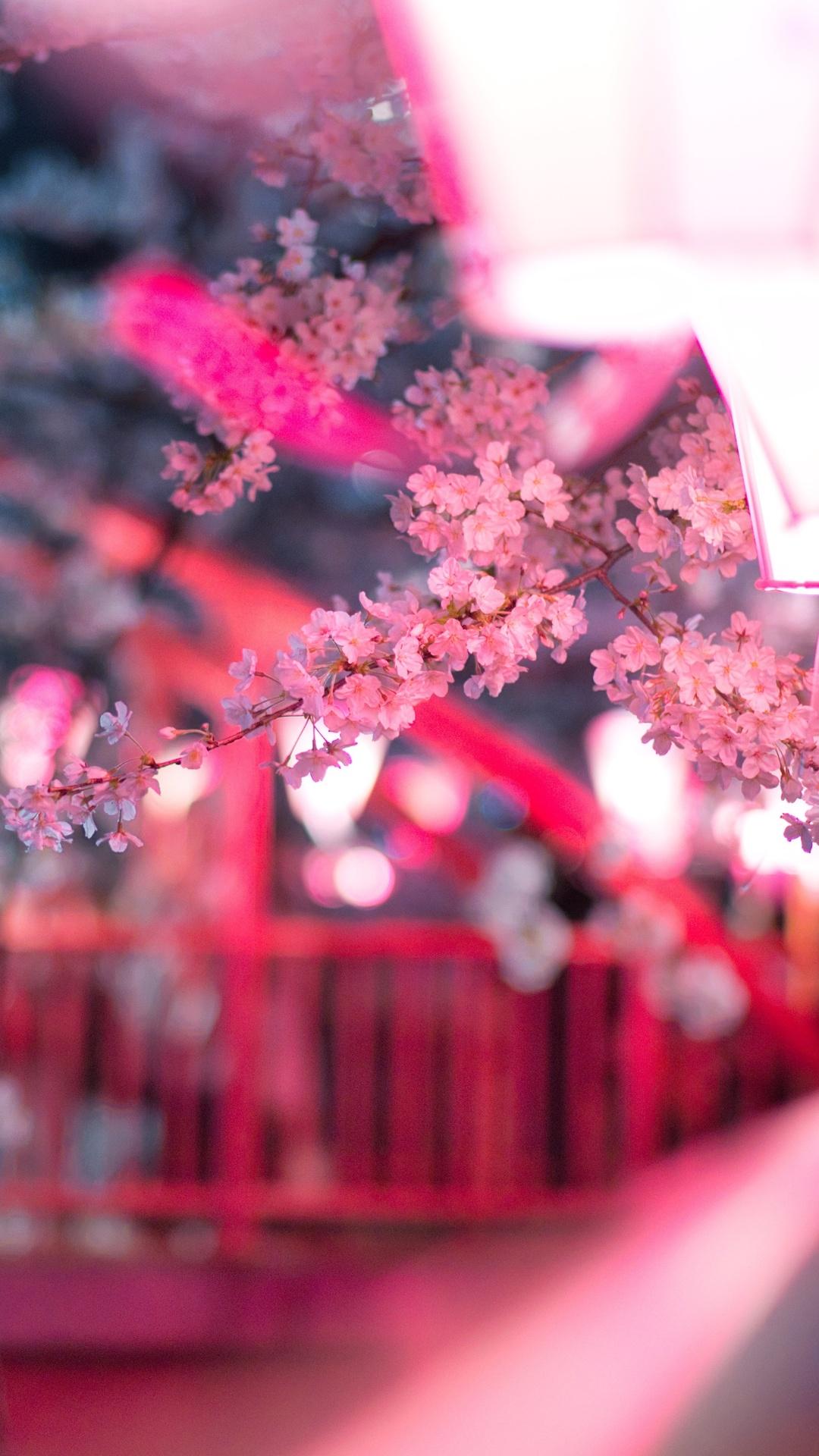 cherry-blossom-flora-flowers-5k-op.jpg