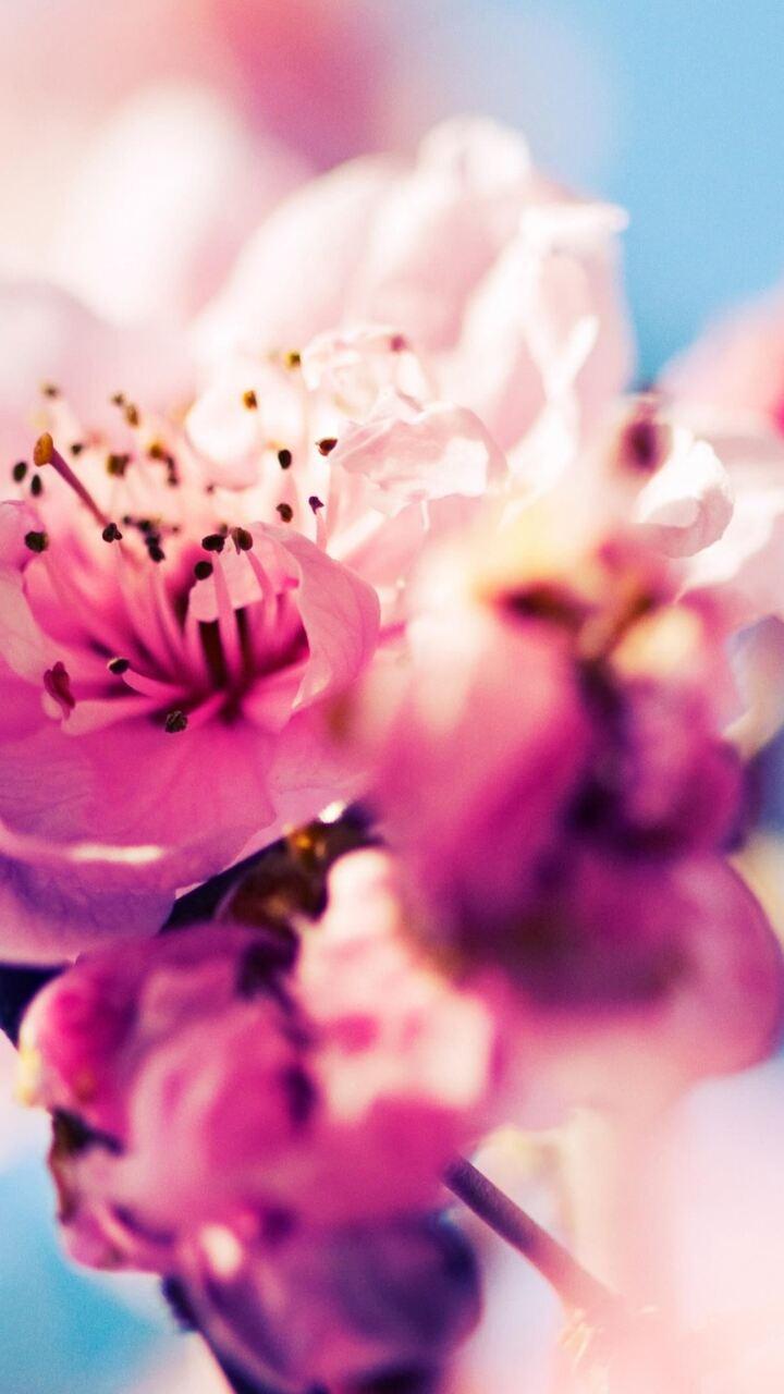 cherry-blossom-on.jpg