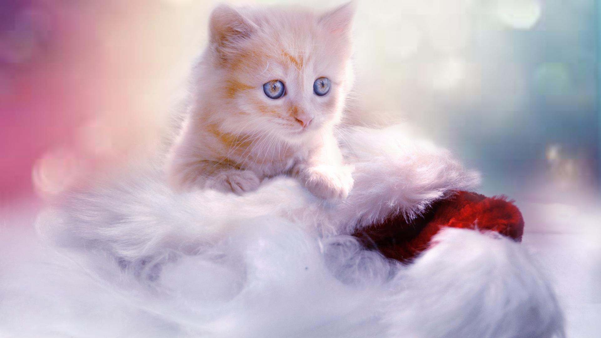 1920x1080 Christmas Kitten Laptop Full Hd 1080p Hd 4k