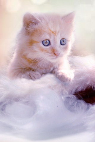 christmas-kitten-rj.jpg