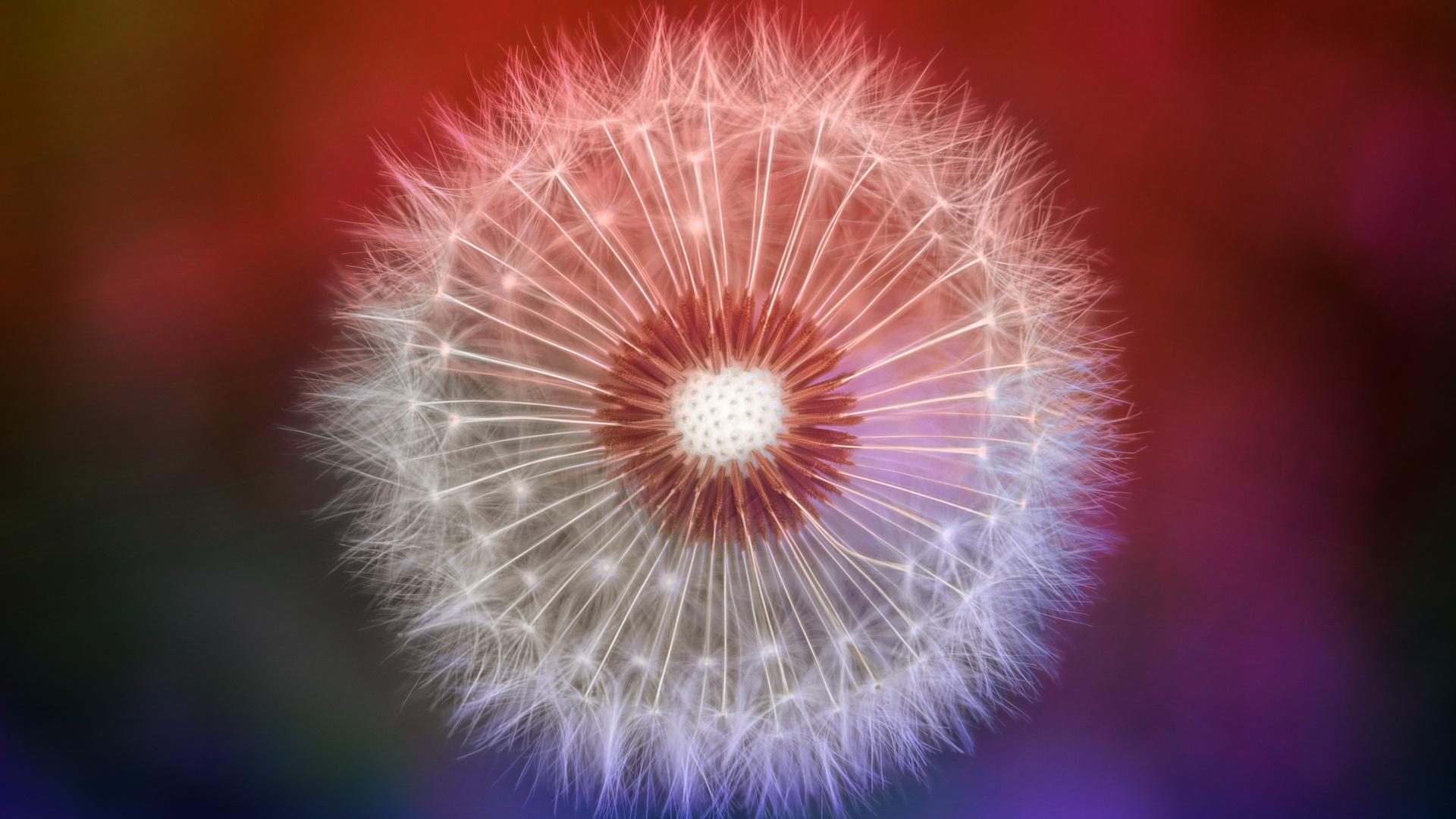 close-up-dandelions-l9.jpg